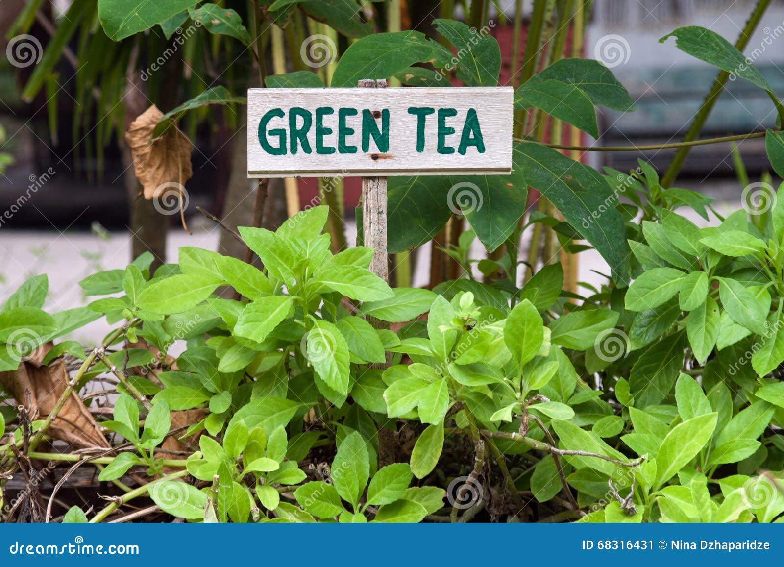 Zeichen des grünen Tees