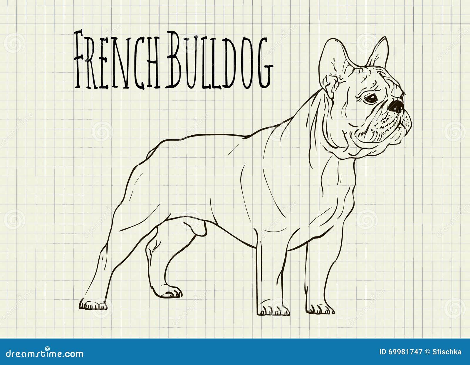 Zeichnen Auf Notizbuchblatt Französische Bulldogge Vektor Abbildung