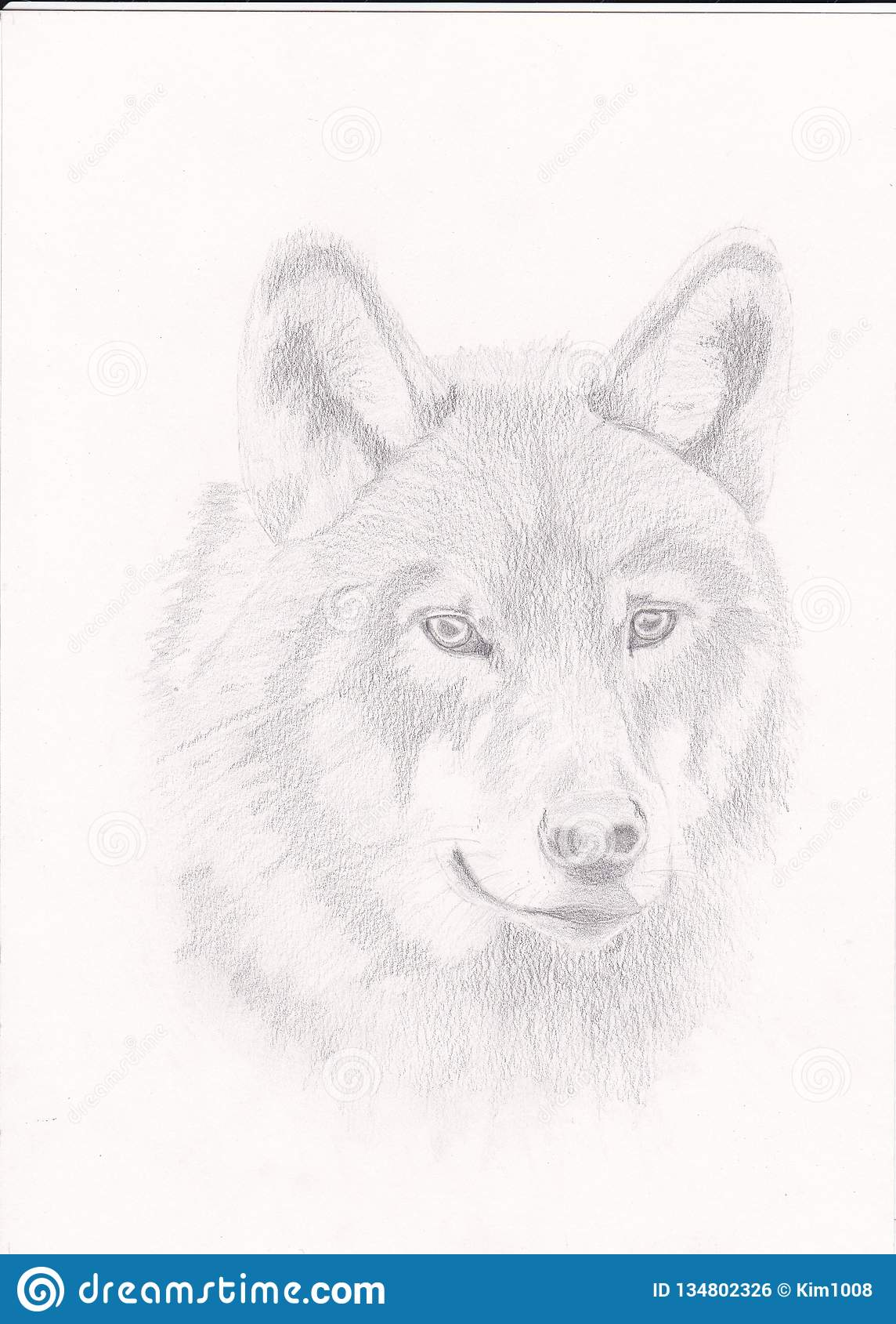 Zeichnen eines Wolfs