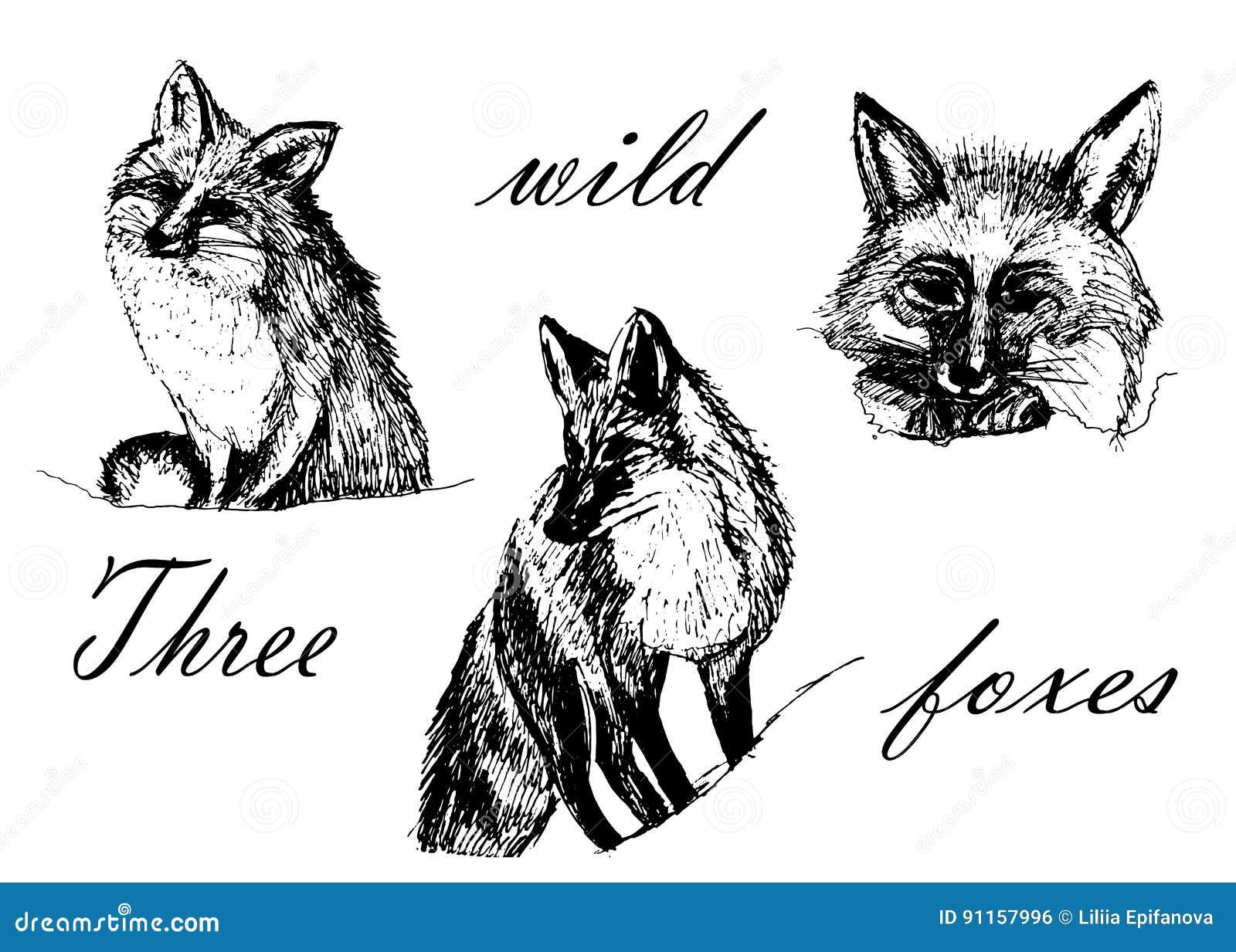 Zeichnender Satz Bilder, Drei Füchse, Skizzieren Von Hand ...