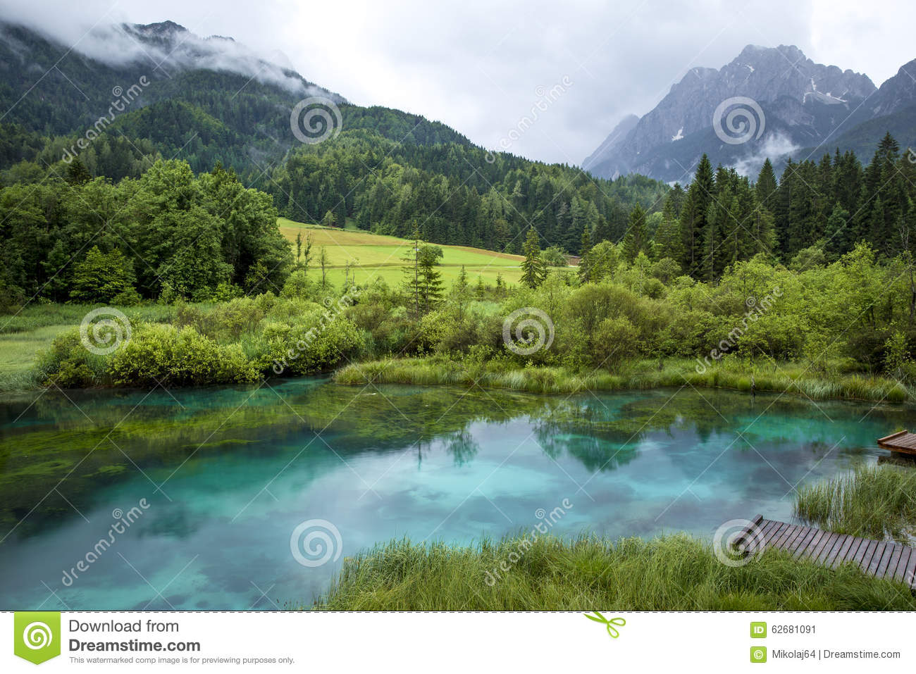 Zelenci pond in slovenia royalty free stock photo for Pond dealers