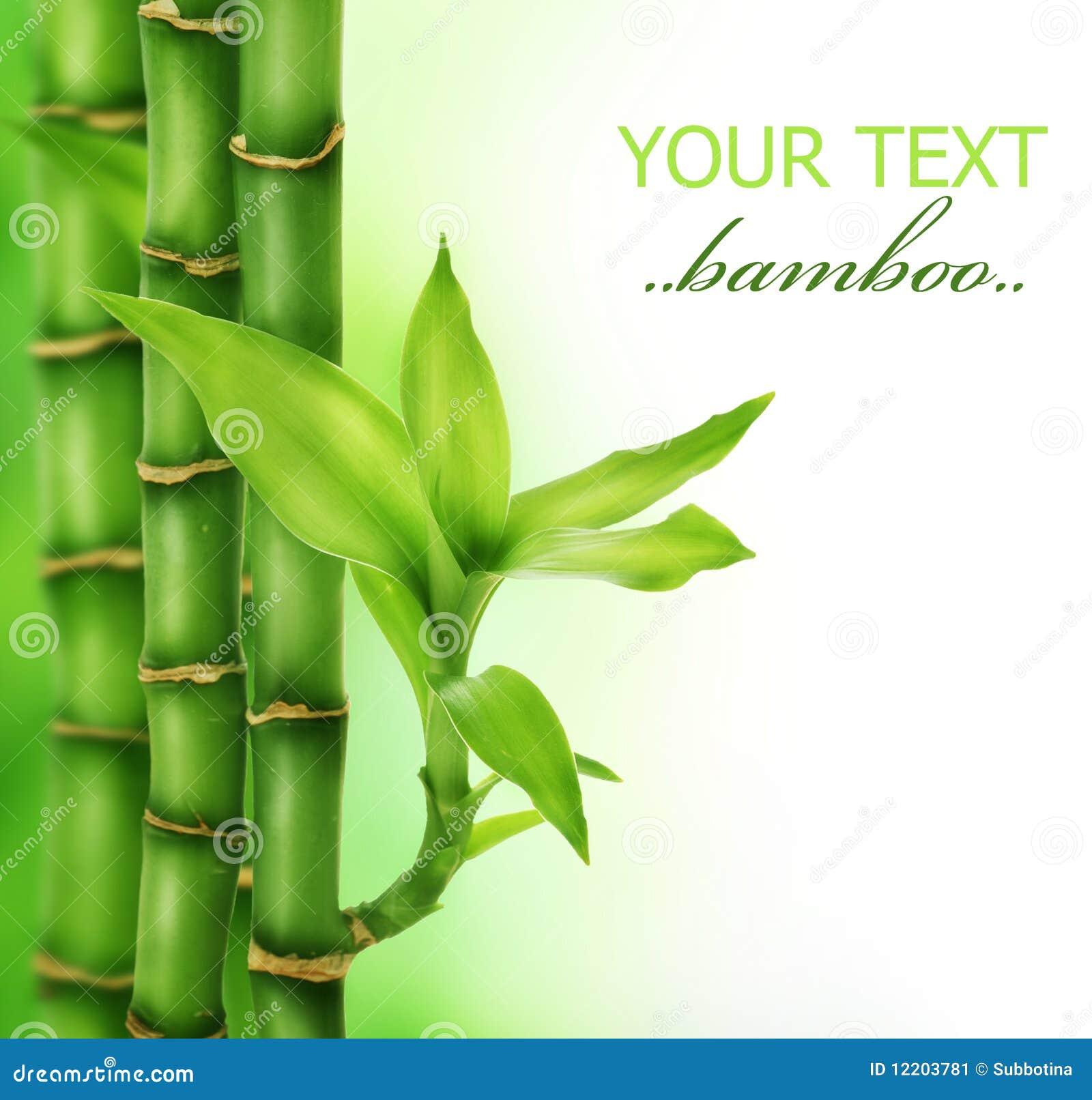 Zen-Bambus