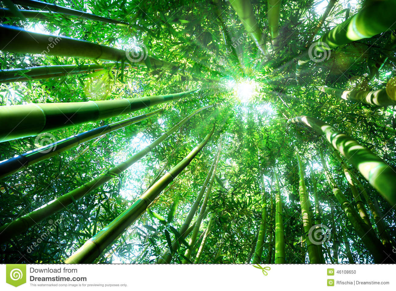 Zen concept in nature stock photo image 46108650 - Decoration zen et nature ...