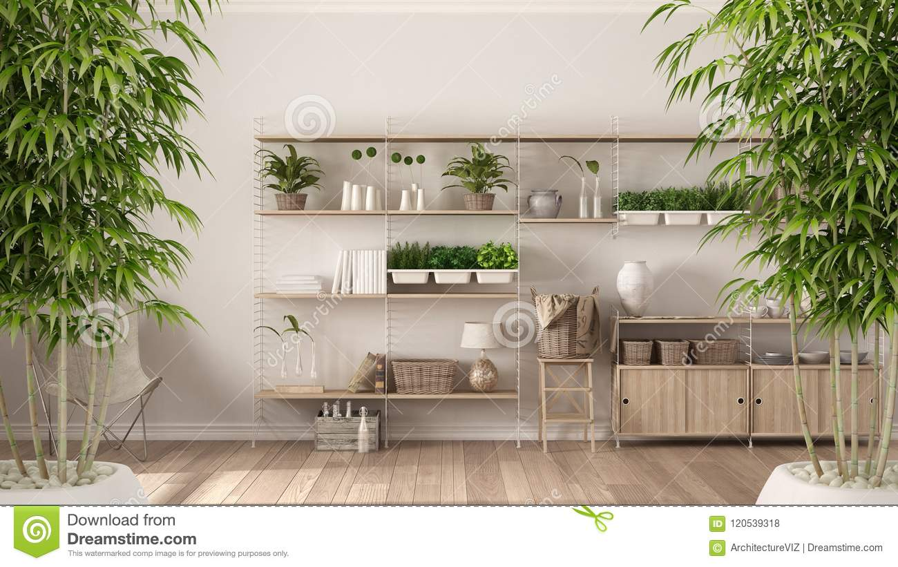 Zen Interior With Potted Bamboo Plant, Natural Interior ...