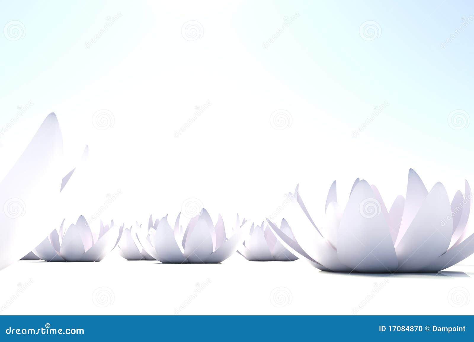 Zen loto Blumen auf weißem Hintergrund