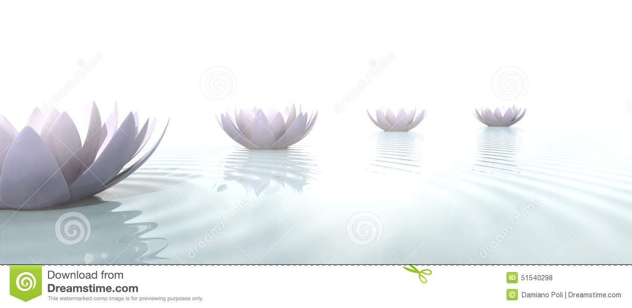 Zen Lotus Flowers Draw A Path On The Water