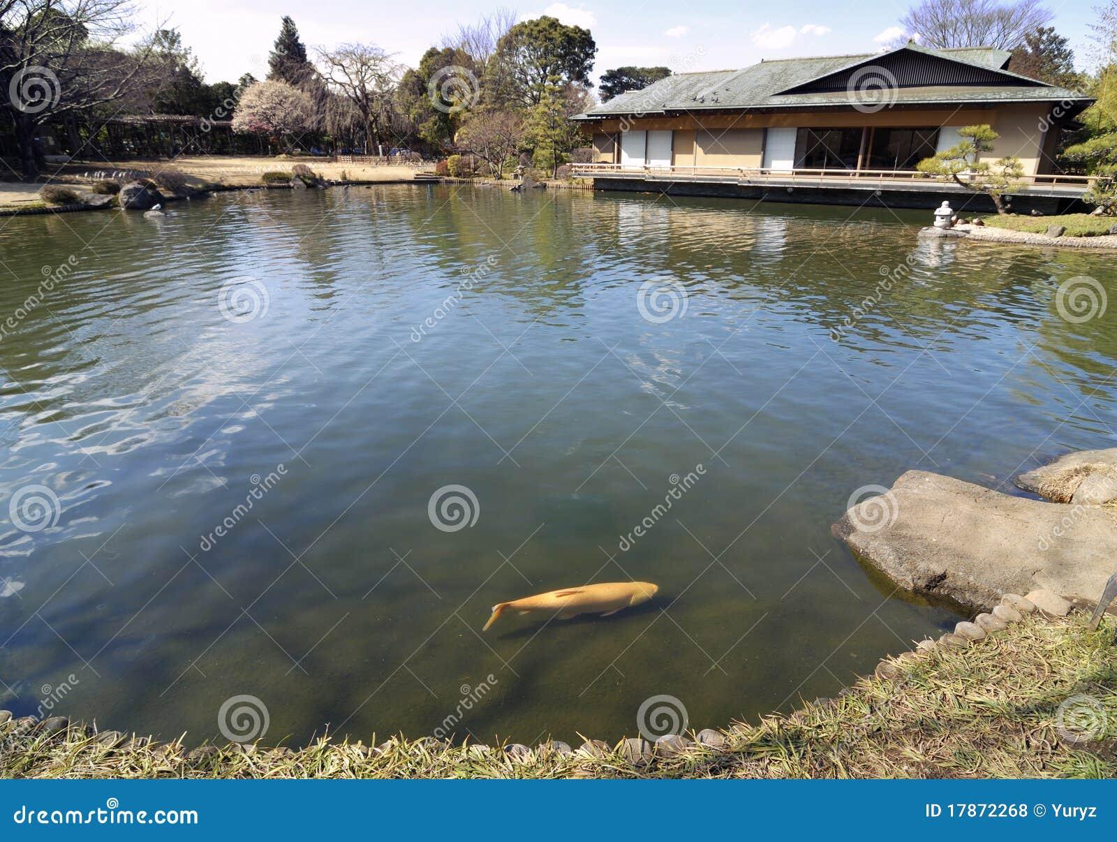 Zen pond royalty free stock photos image 17872268 for Koi pond zen