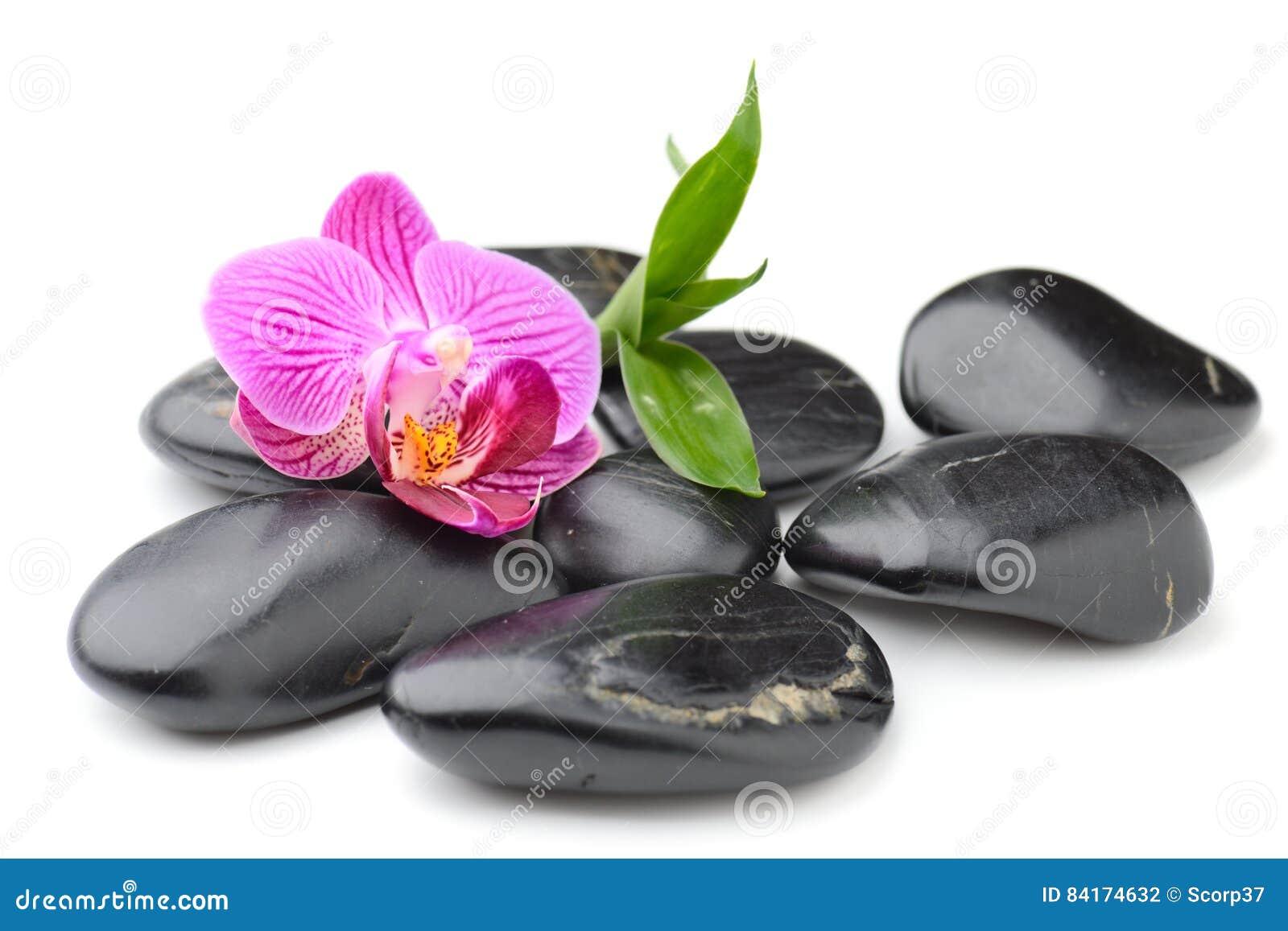 Zenbasaltsteine Orchidee Und Bambus Stockfoto Bild Von Kiesel