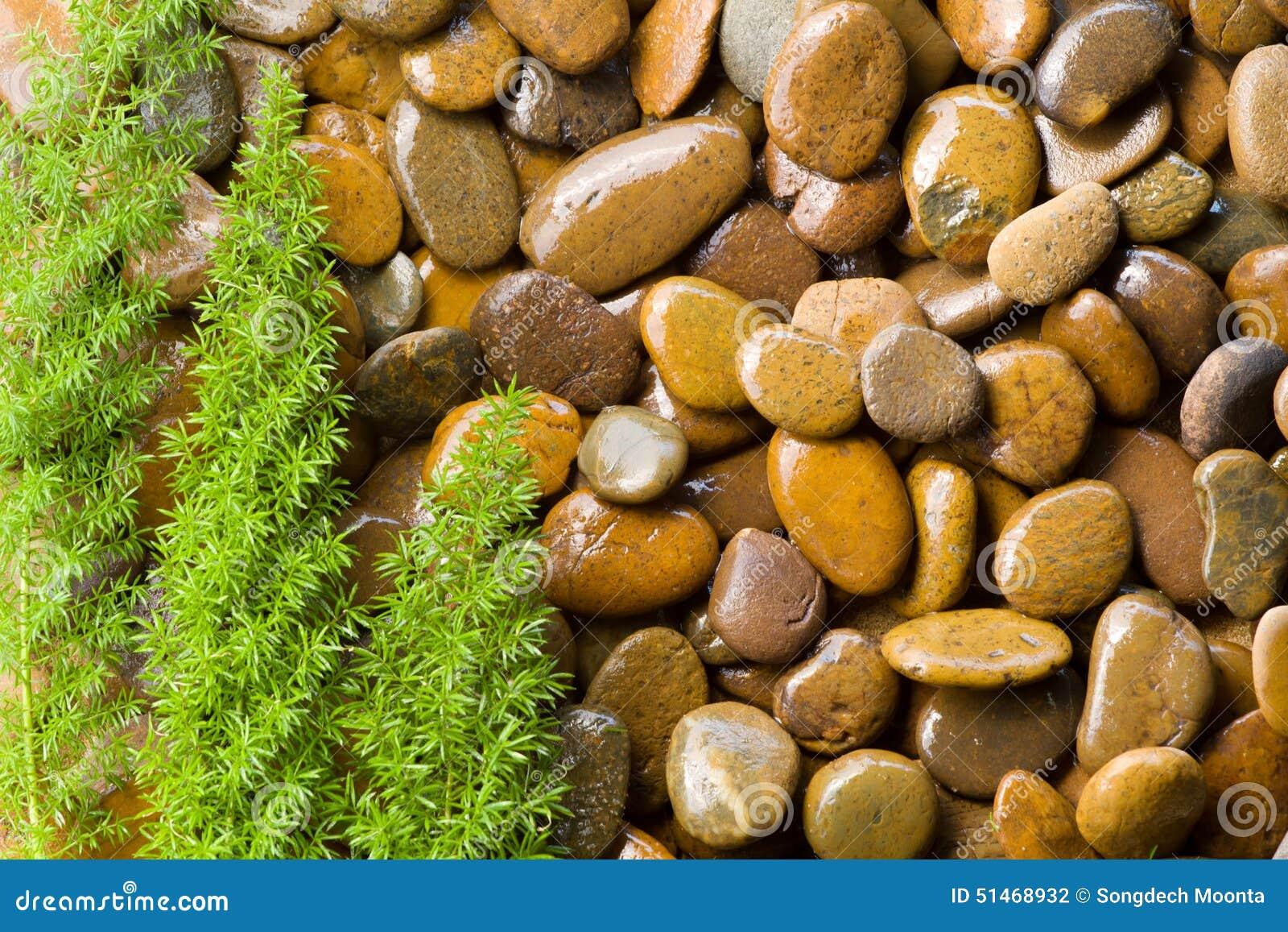 ZENES Stone con la hierba verde