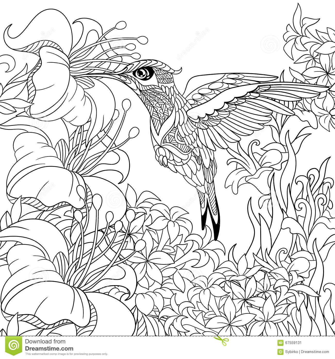 Coloring pages hummingbirds