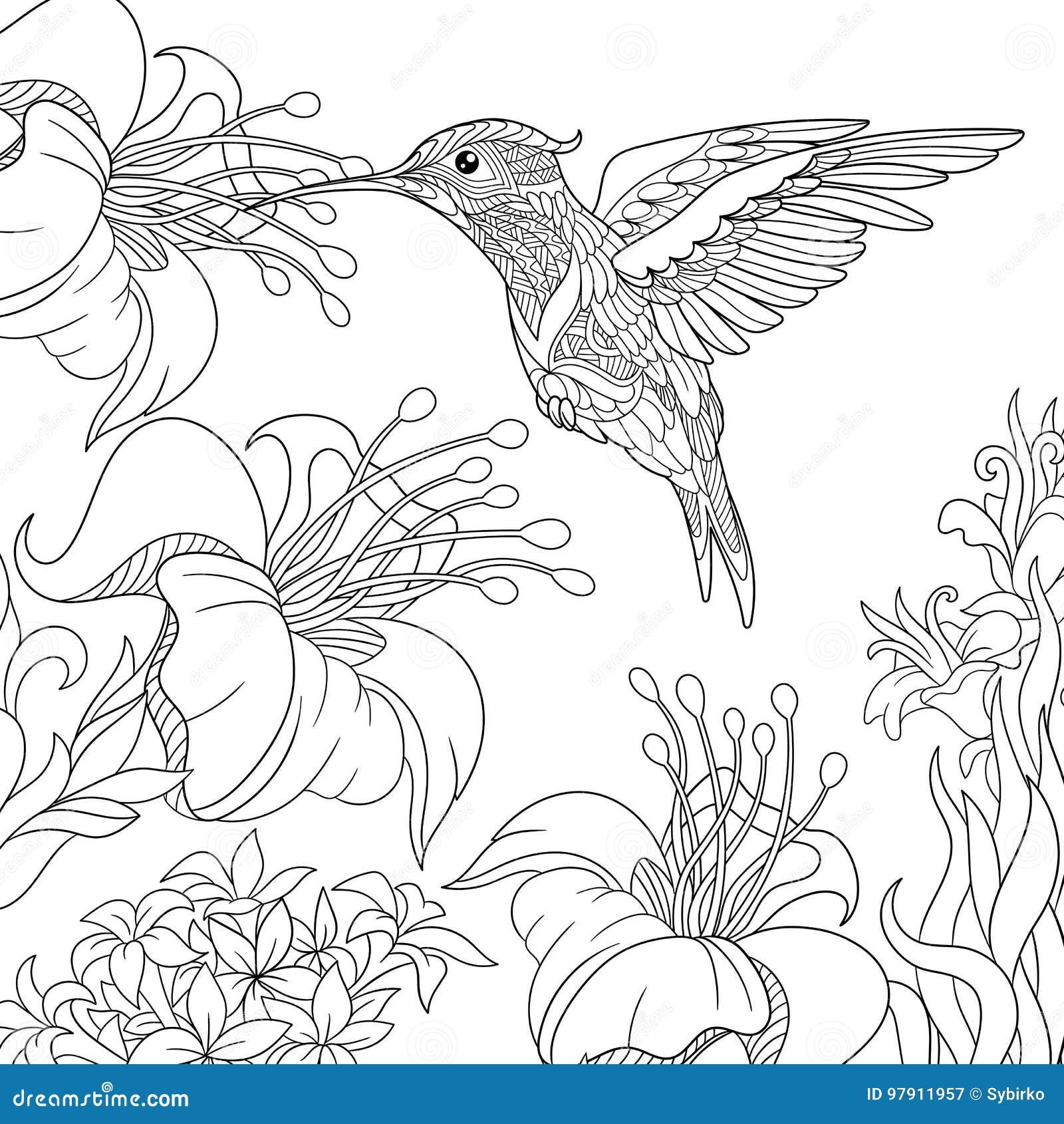 Zentangle Stylized Hummingbird Stock Vector Illustration Of