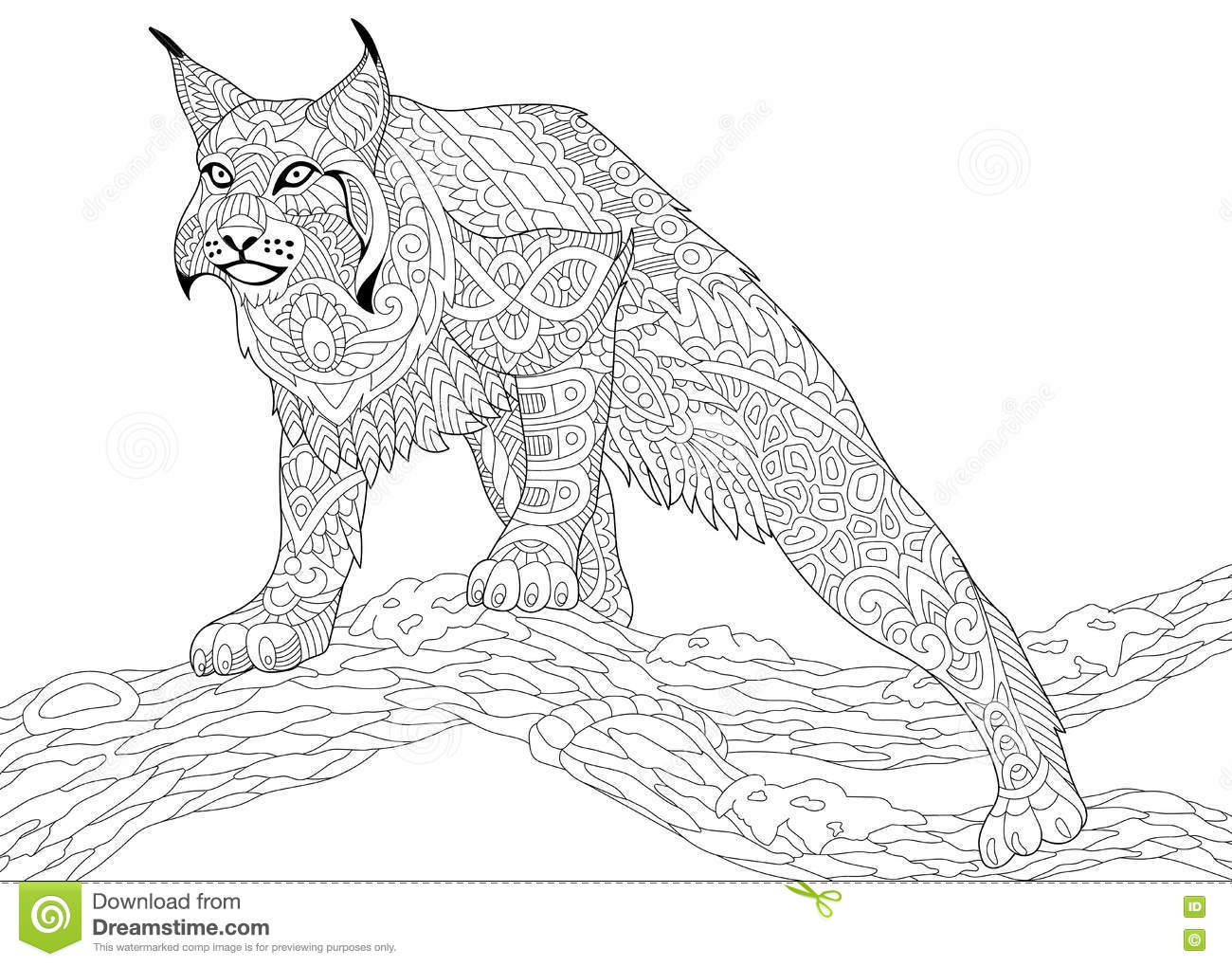 Bobcat Coloring Page Stock Illustrations 25 Bobcat Coloring Page Stock Illustrations Vectors Clipart Dreamstime