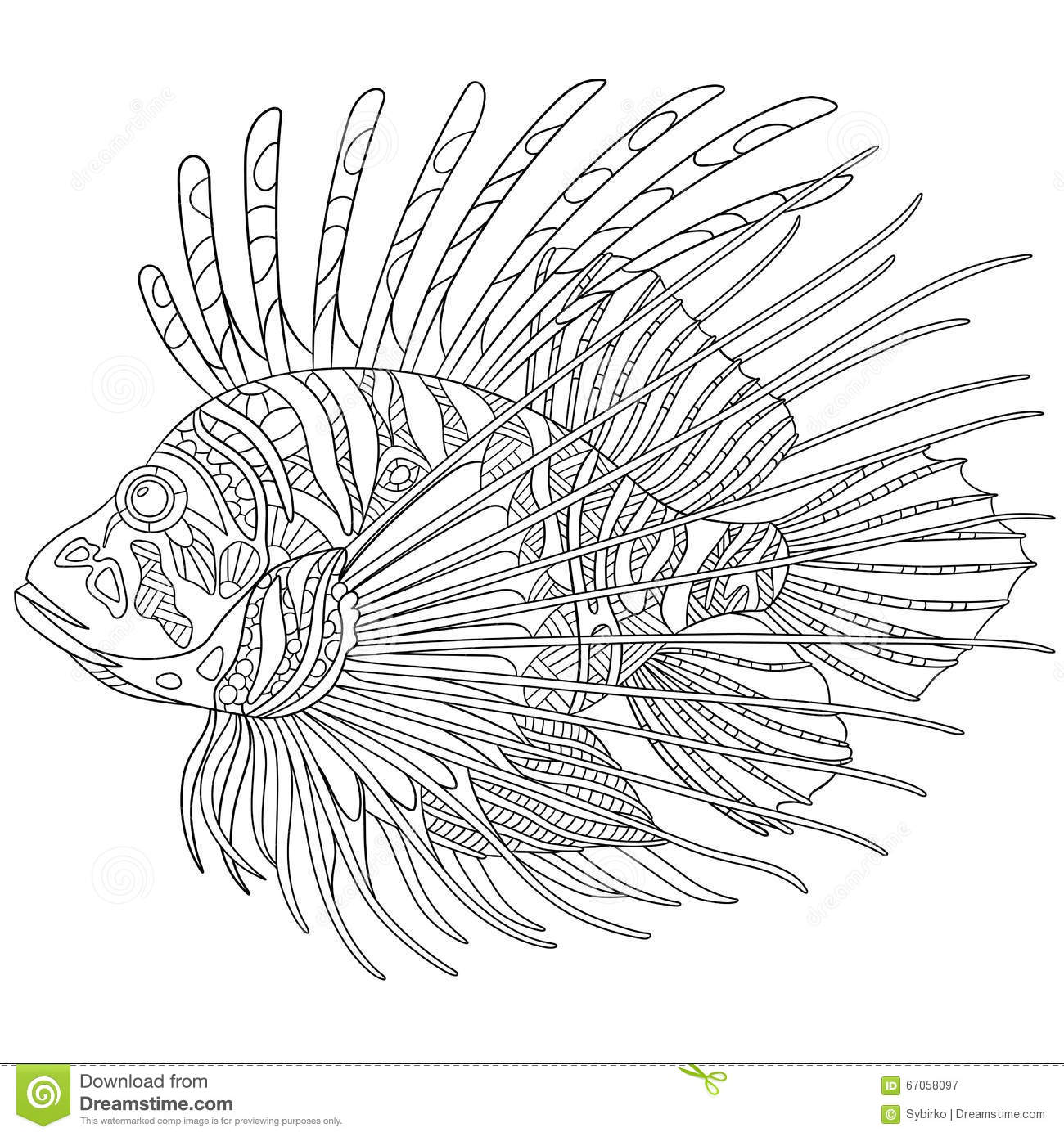 Adult Best Lionfish Coloring Page Images cute zentangle stylized zebrafish lionfish stock vector image 67058097 gallery images