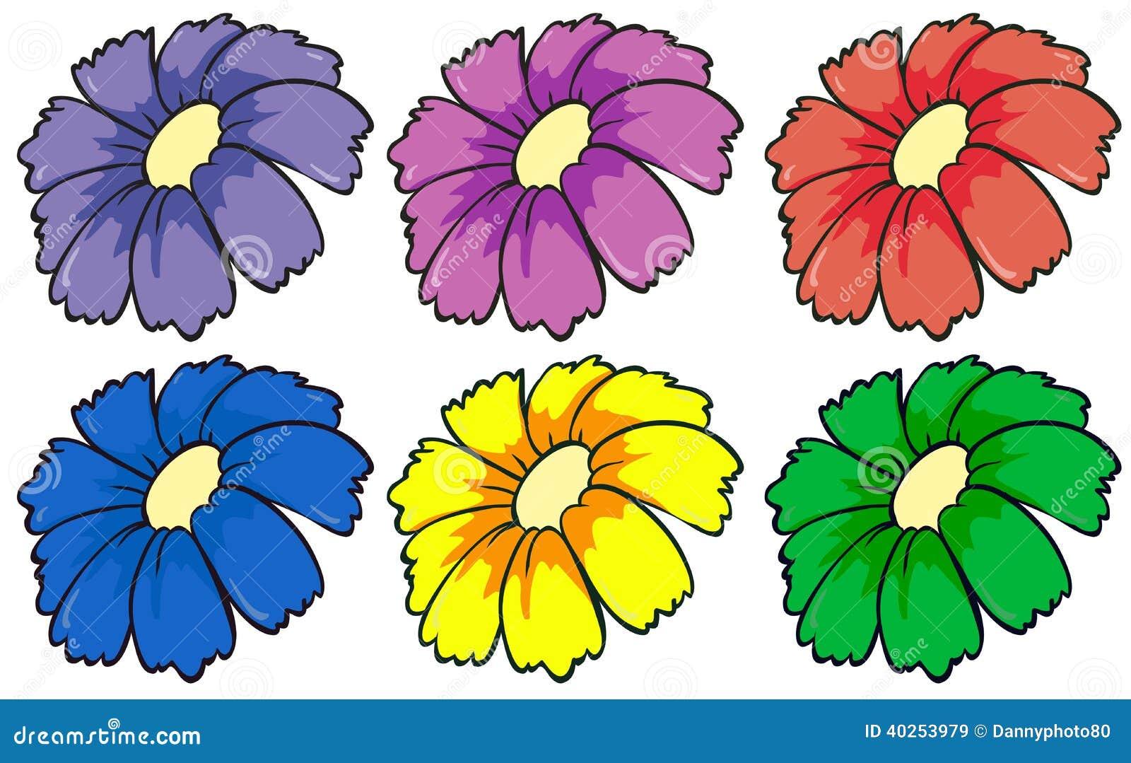Zes kleurrijke bloemen