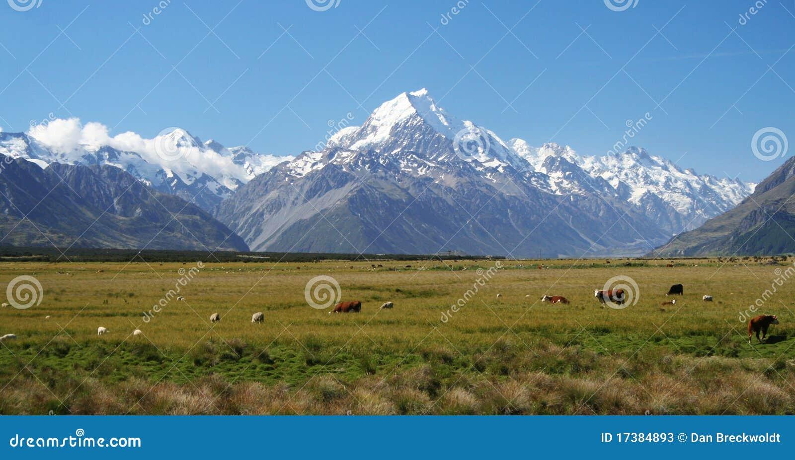 Zet Cook in Nieuw Zeeland op