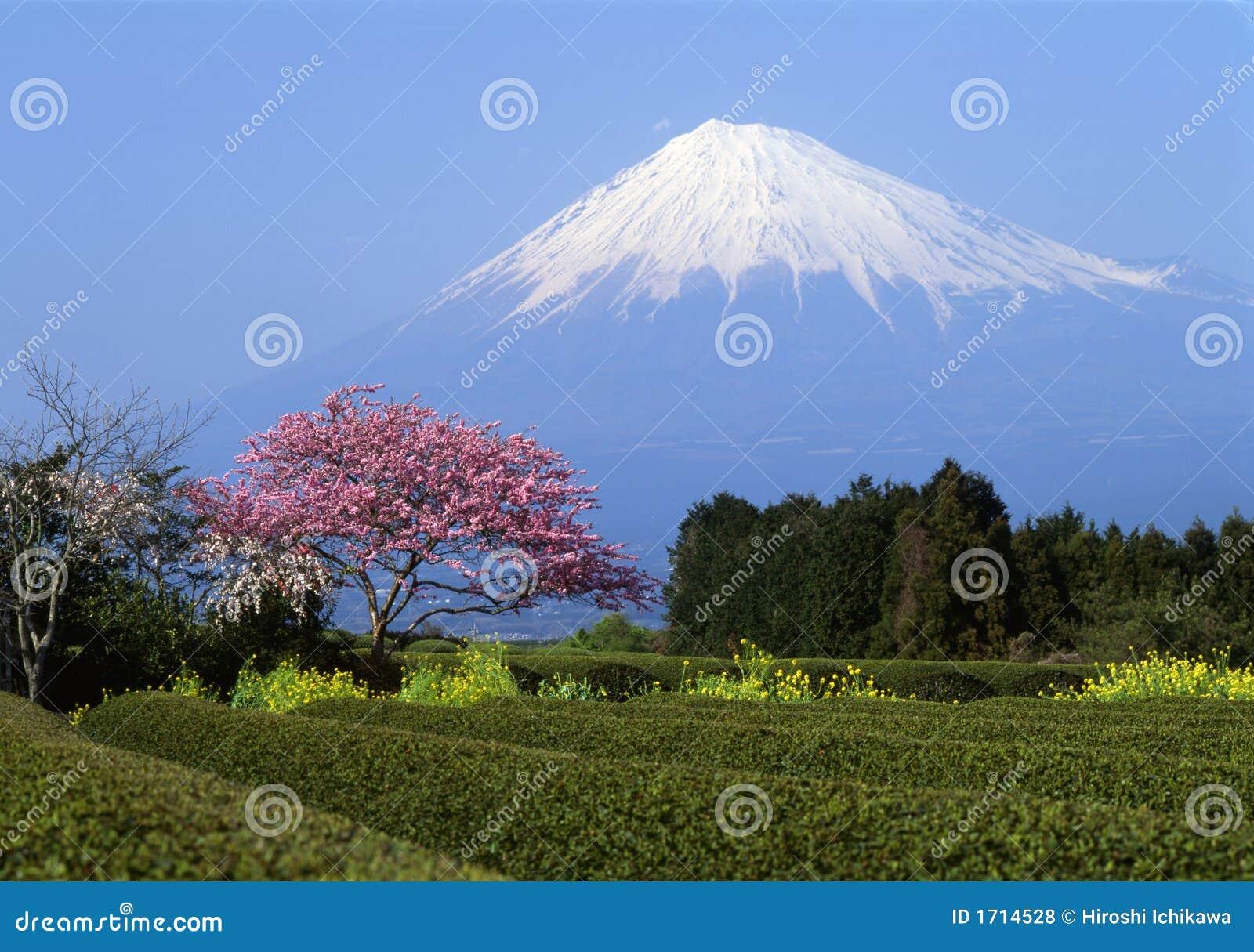 Zet Fuji I op