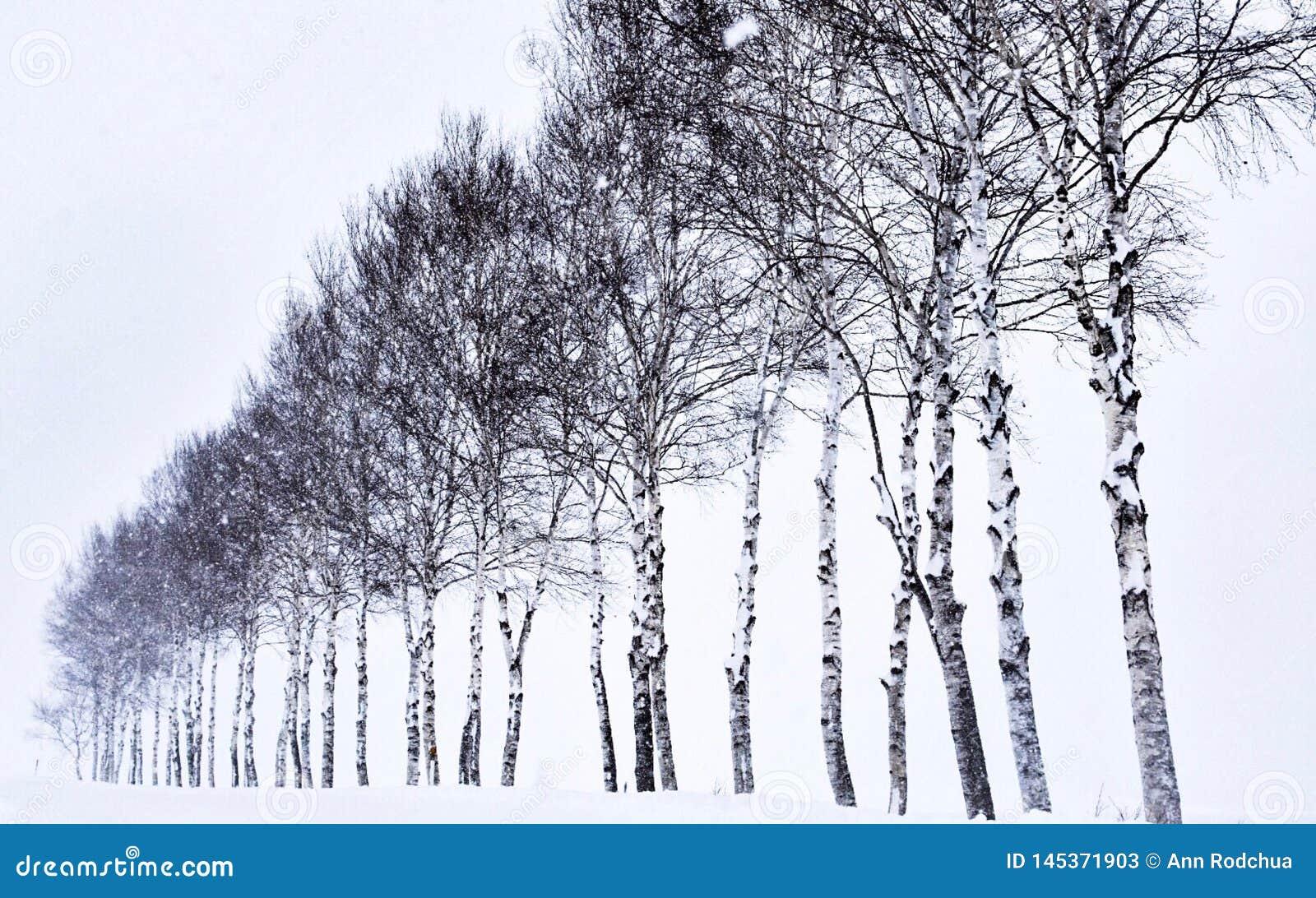 Zeven Sterbomen in Hokkaido, Japan