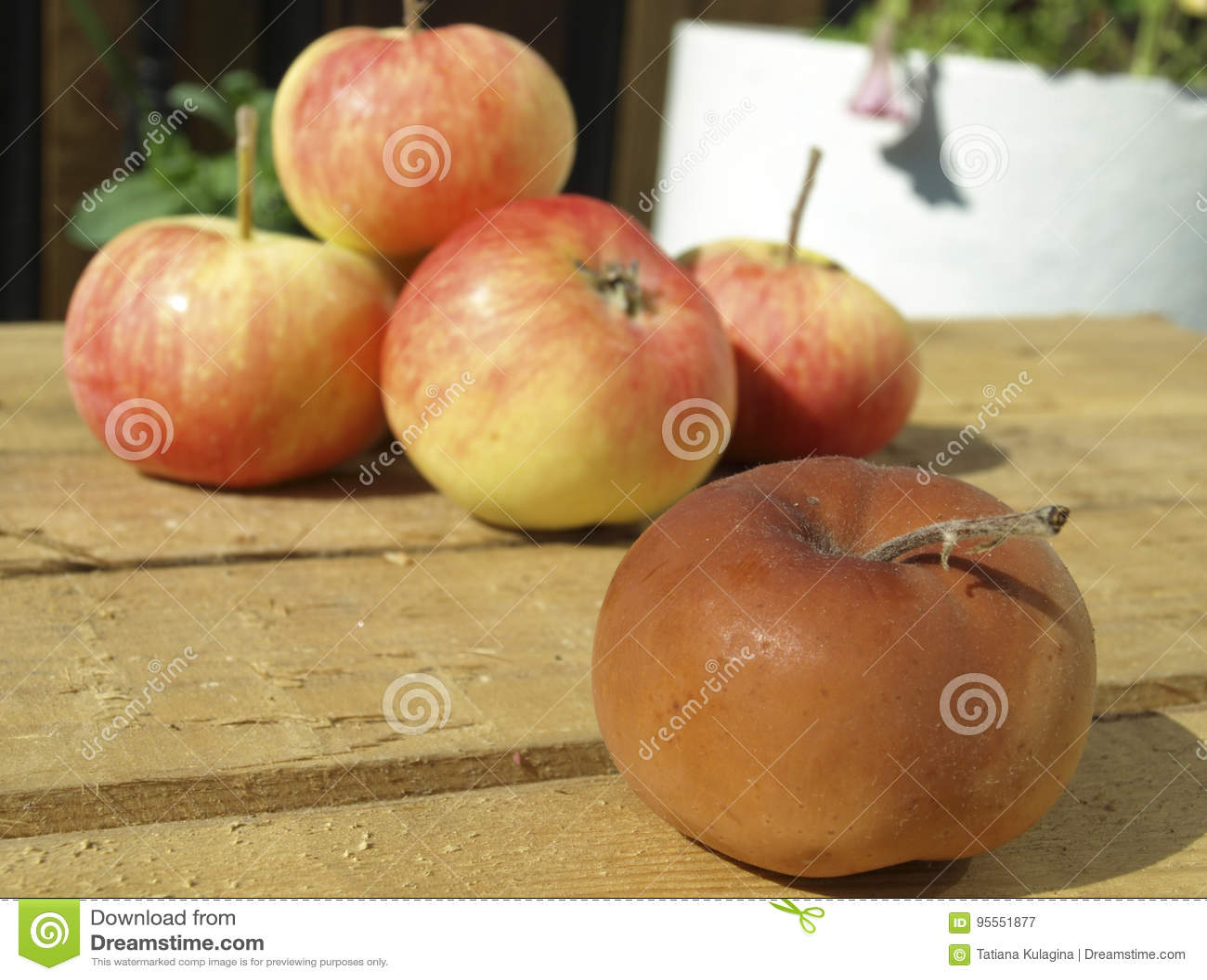 Zgniłe jabłko