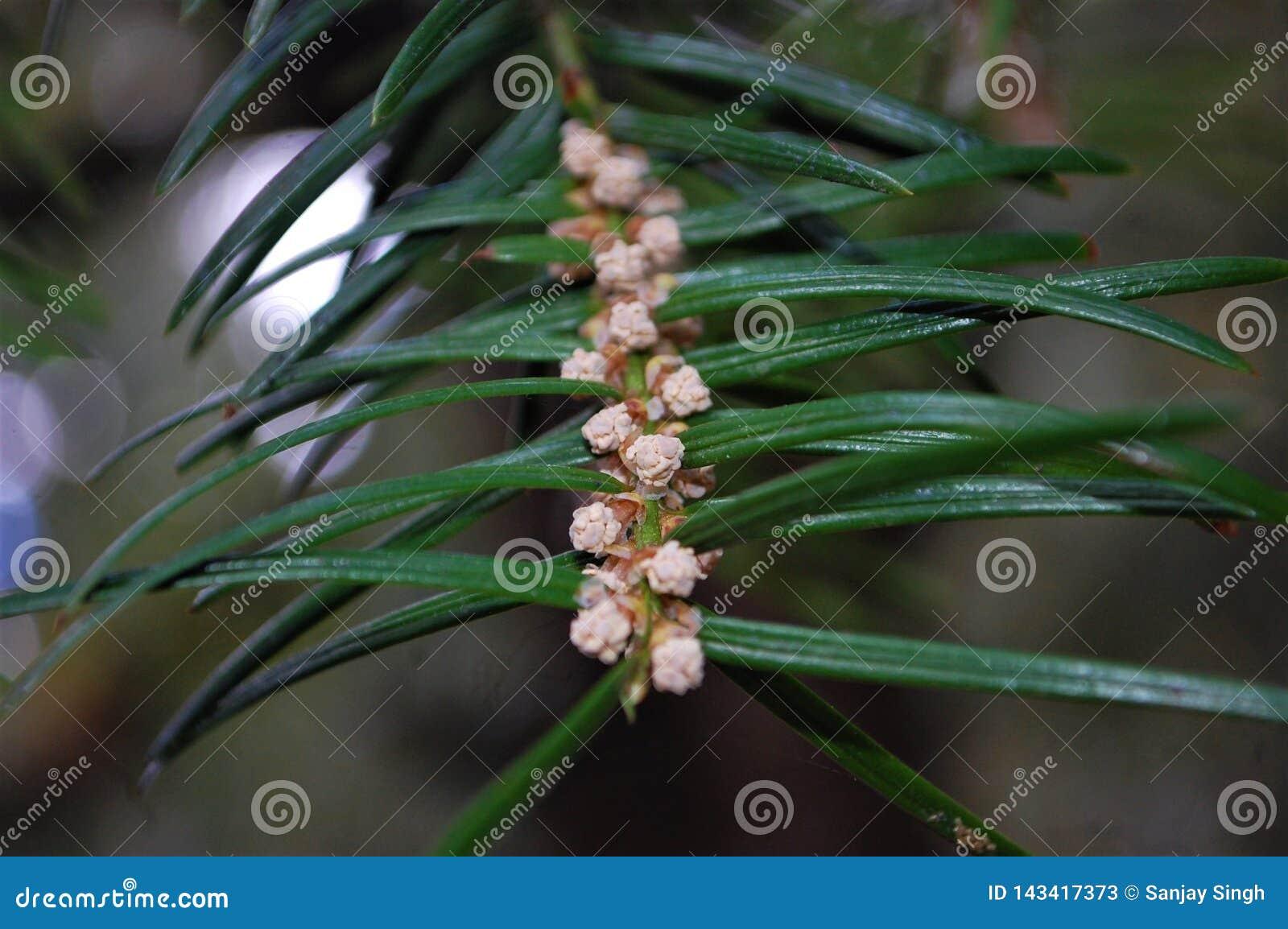 Ziarna i liść kombinacja przedstawia piękno drzewa