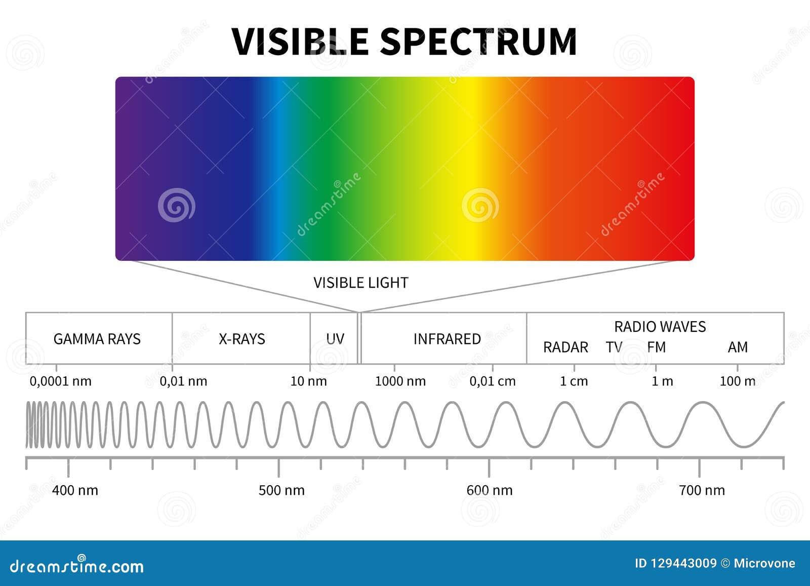 Zichtbaar licht diagram Kleuren elektromagnetisch spectrum, lichte golffrequentie De onderwijsvector van de schoolfysica