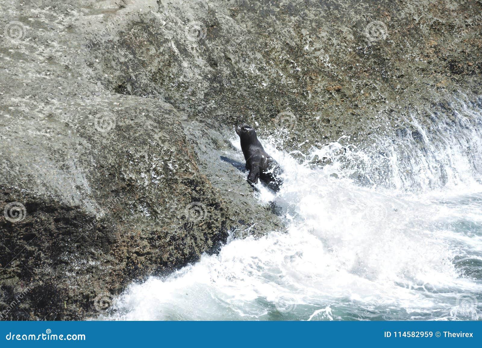 Zie Leeuwen in het Valdes-Schiereiland