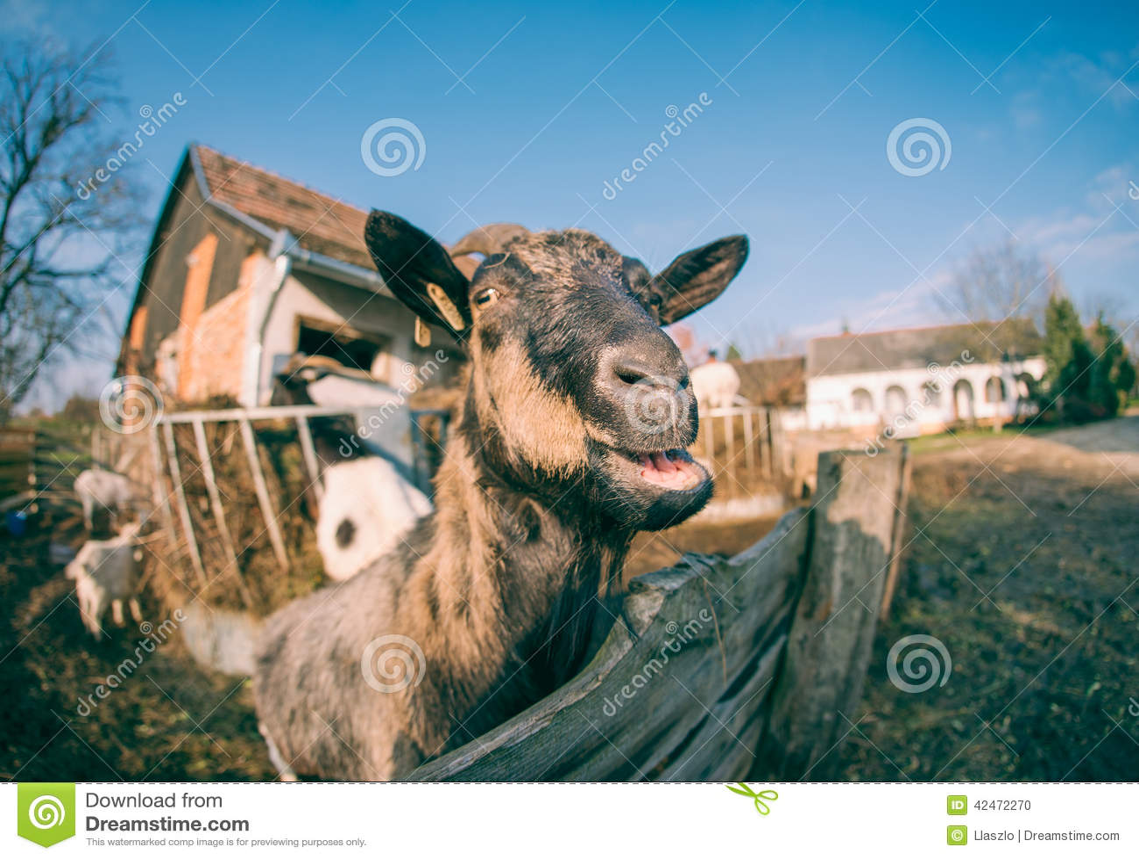 Ziege, die über Zaun schaut