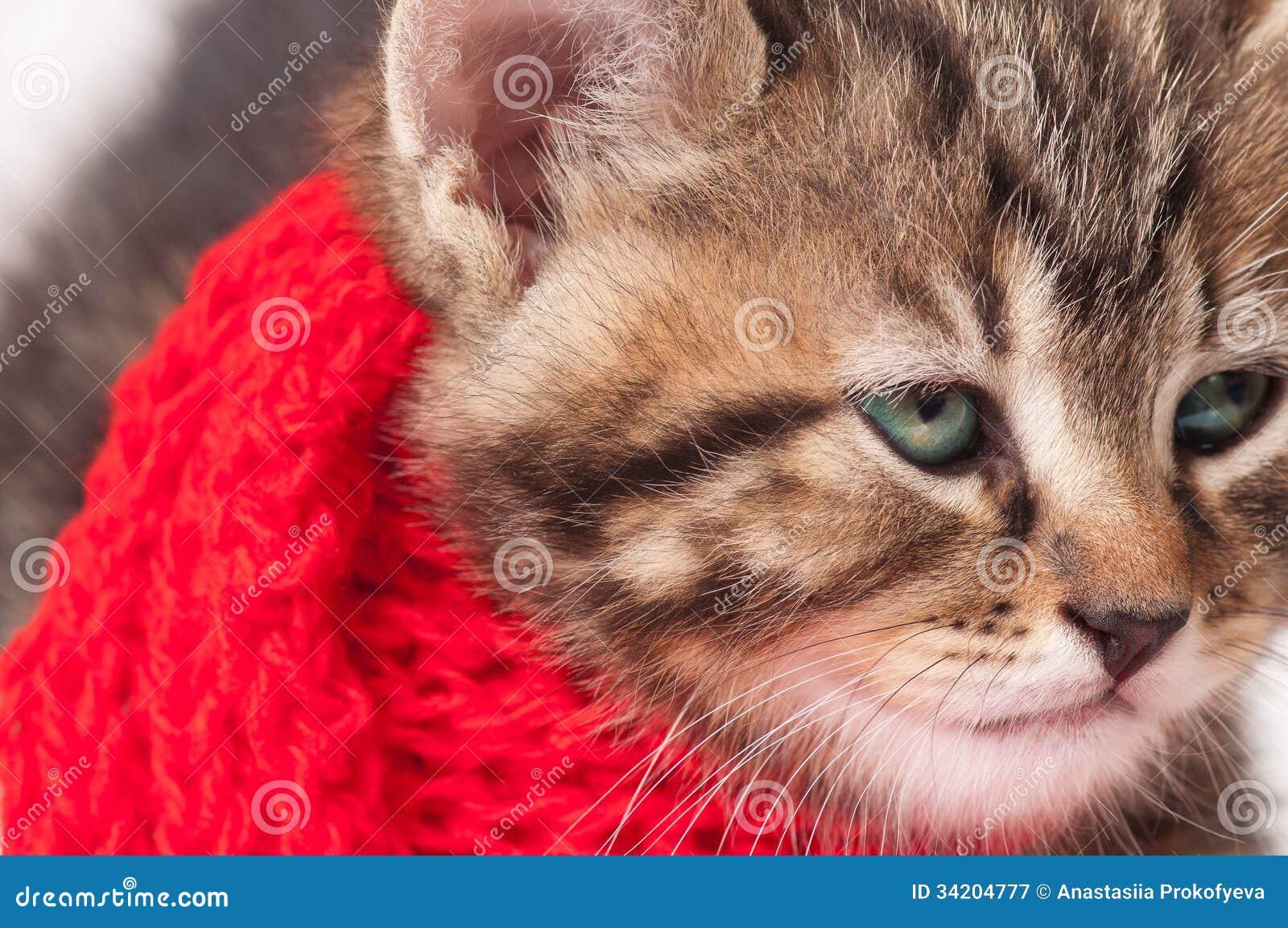 Ziek katje