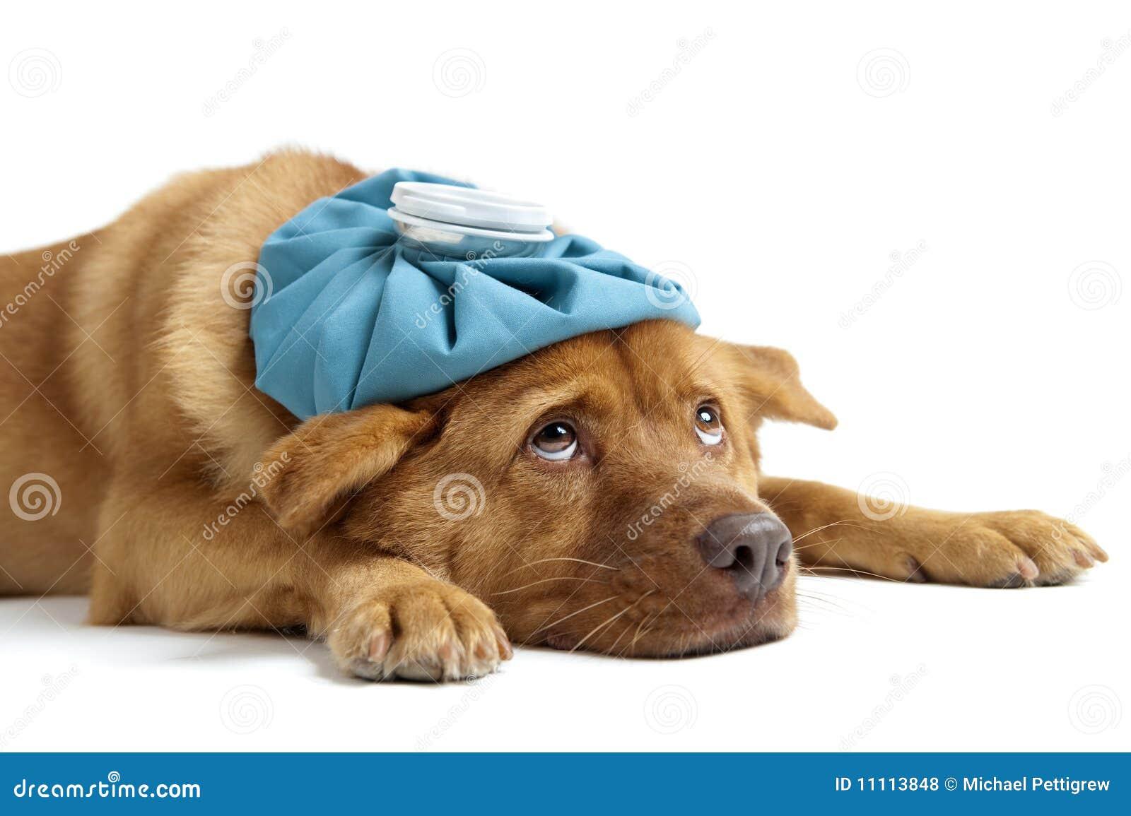 Zieke Hond