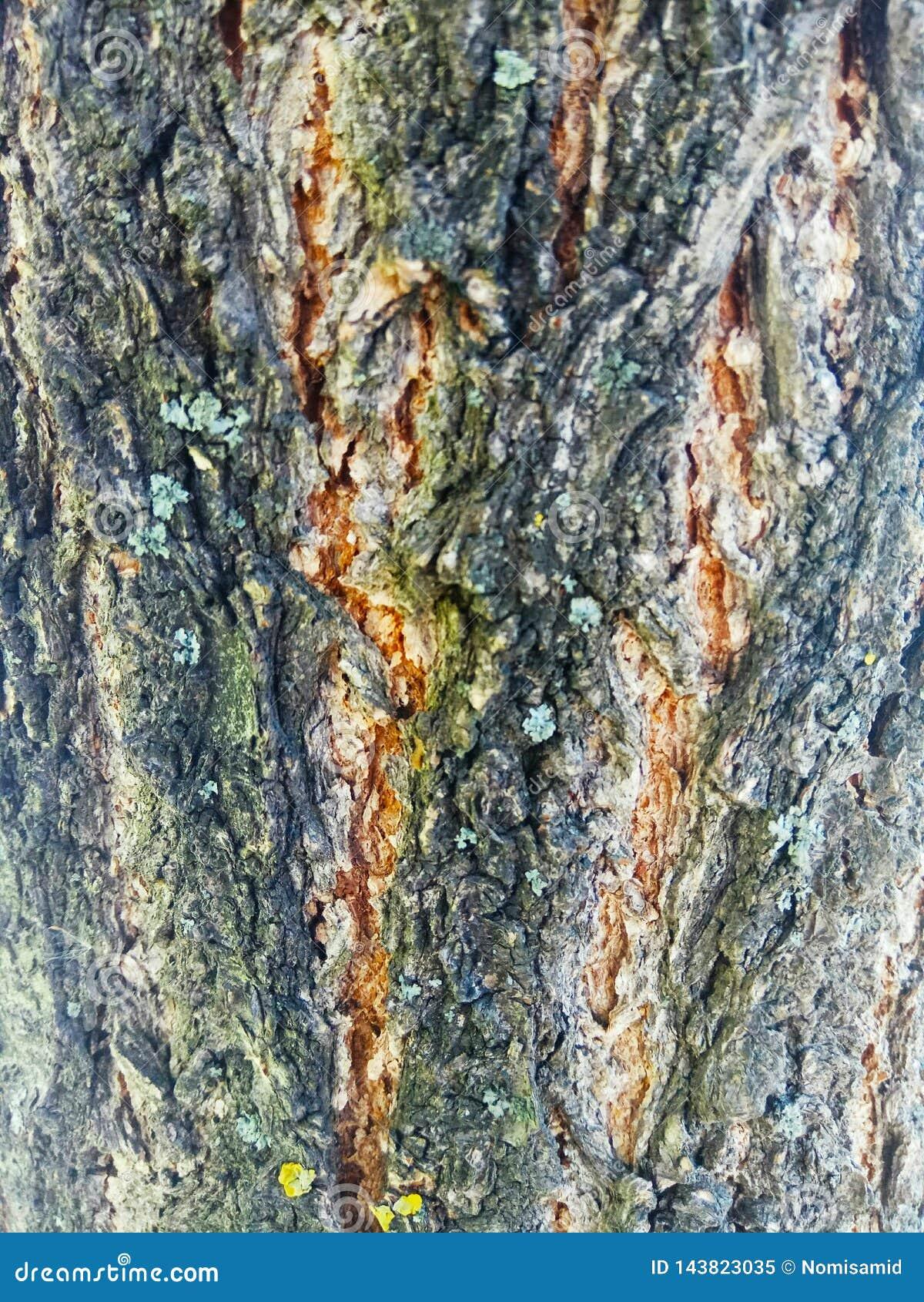 Zieleń i żółta drzewna barkentyna