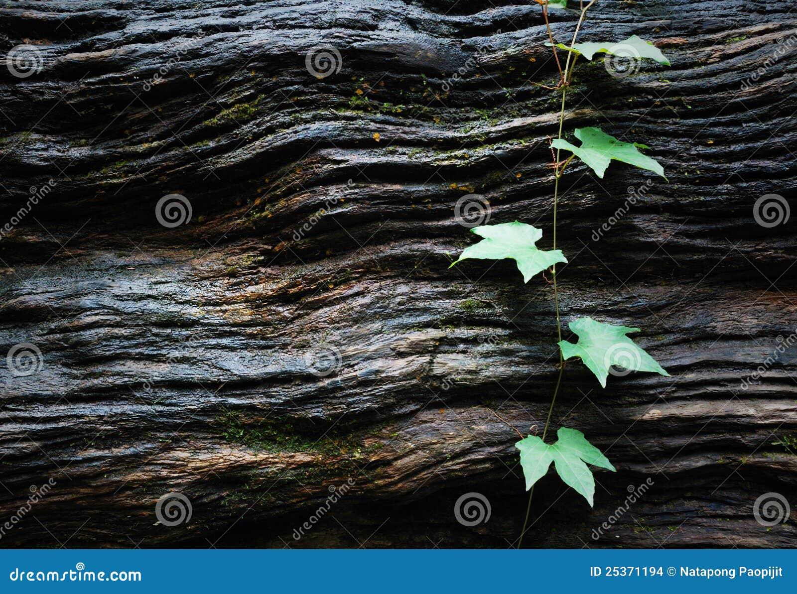 Zieleń liść texture drewno