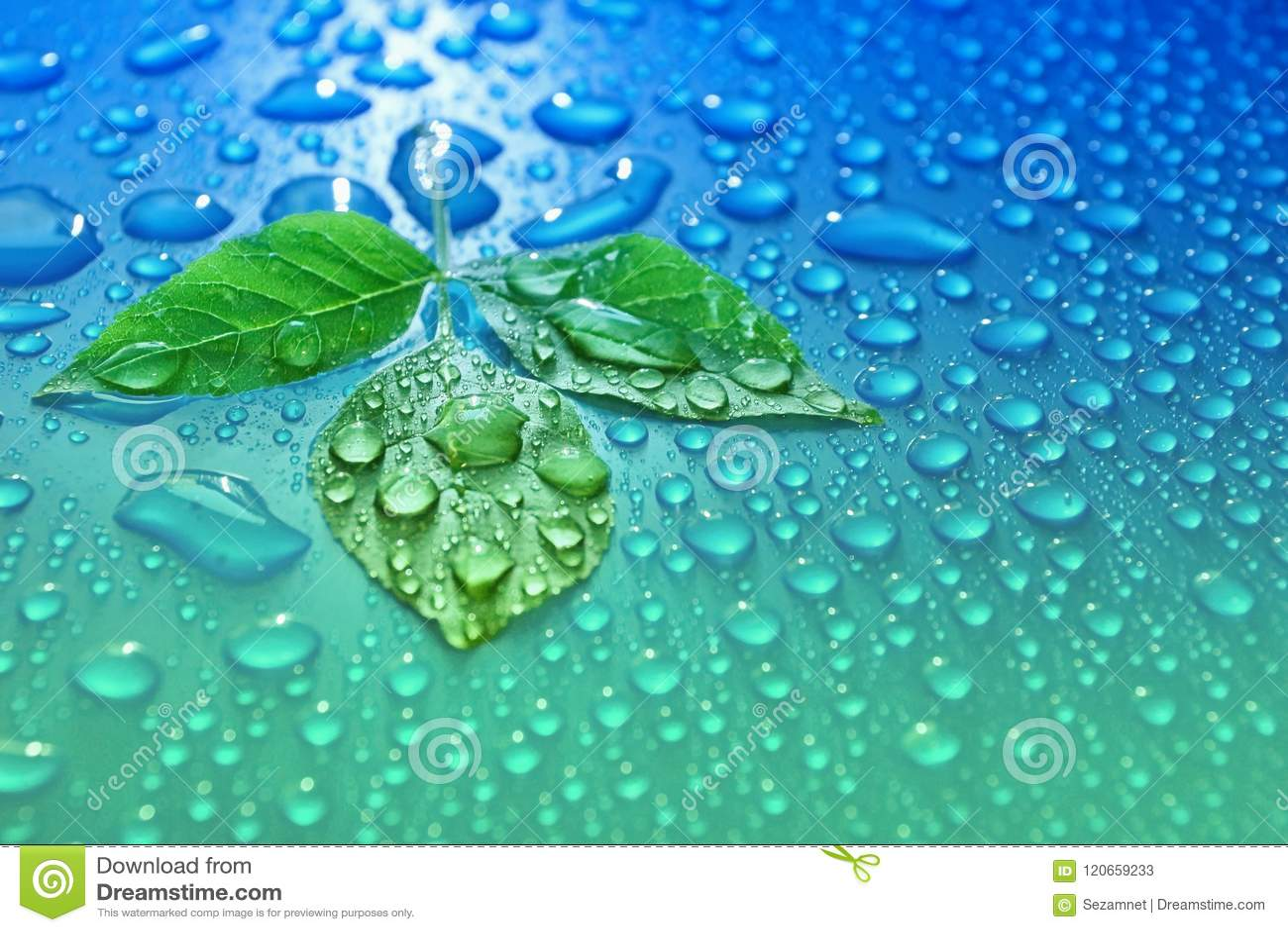 Zieleń liście na błękitne wody opuszczają tło ekologii energię śliwki