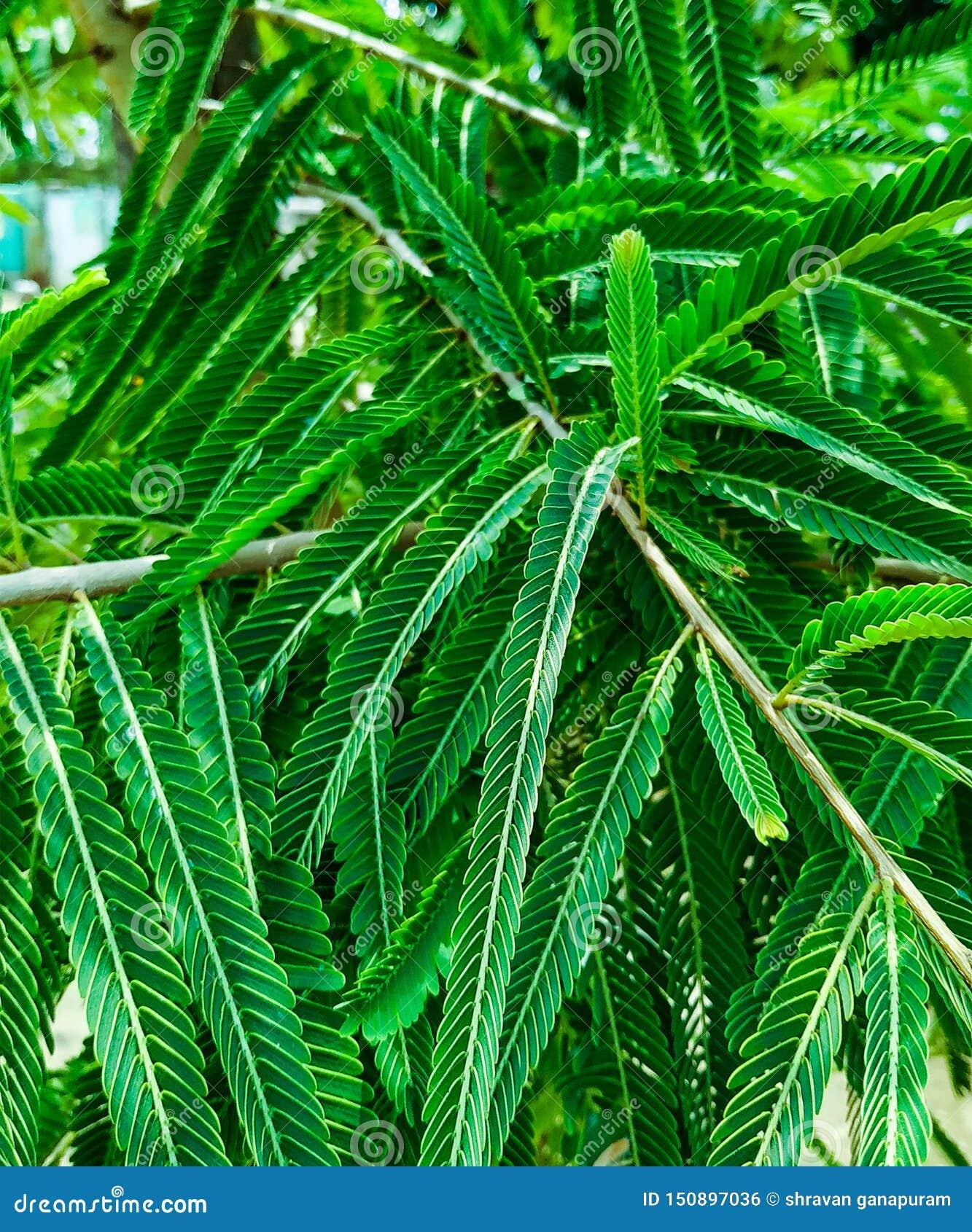Zieleń liście patrzeje wibrujący z zbliżenie strzałem