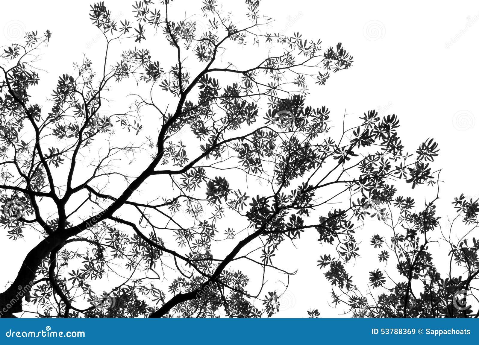 Zieleń opuszcza monochrom i rozgałęzia się