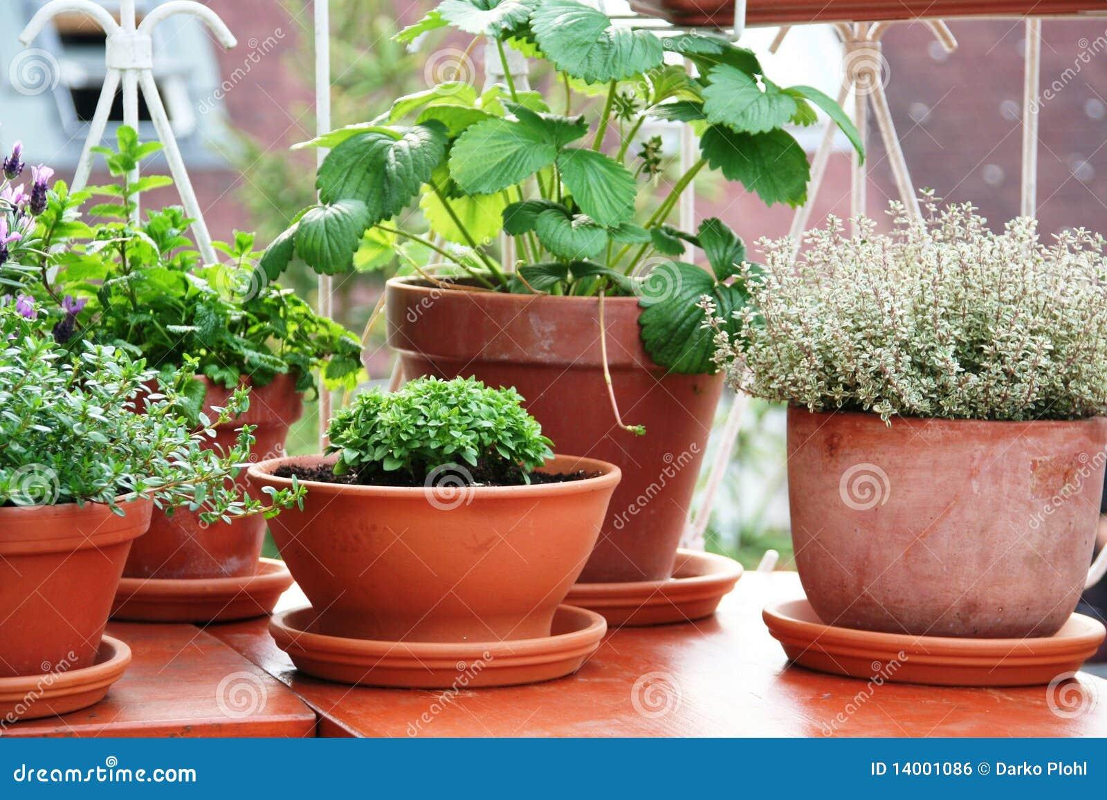 Ziele balkonowa jagodowa roślina