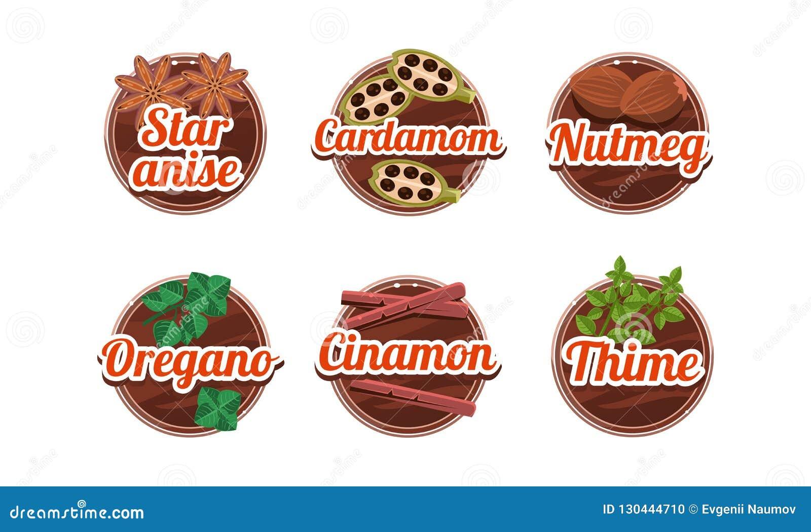 Ziele i pikantność kuchenne odznaki ustawiać, gwiazdowy anice, kardamon, nutmeg, oregano, cinamon, thime etykietek wektorowa ilus