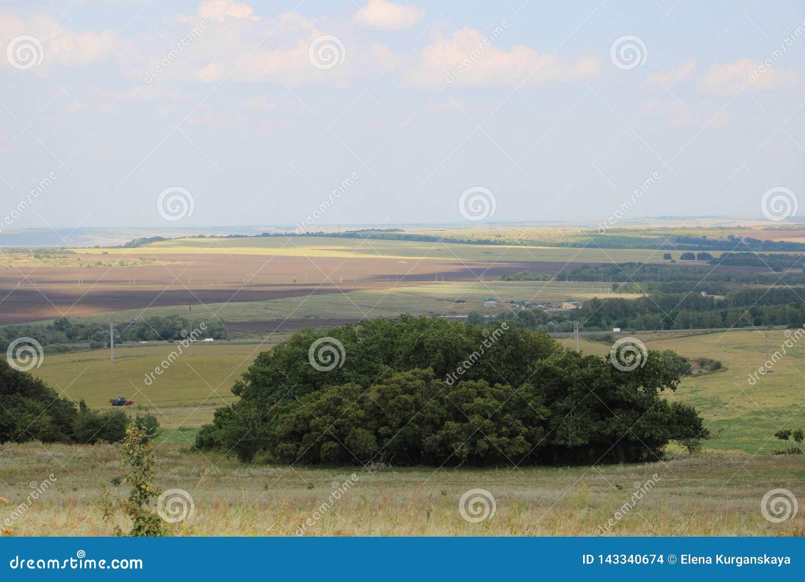 Zieleni łąki i pola