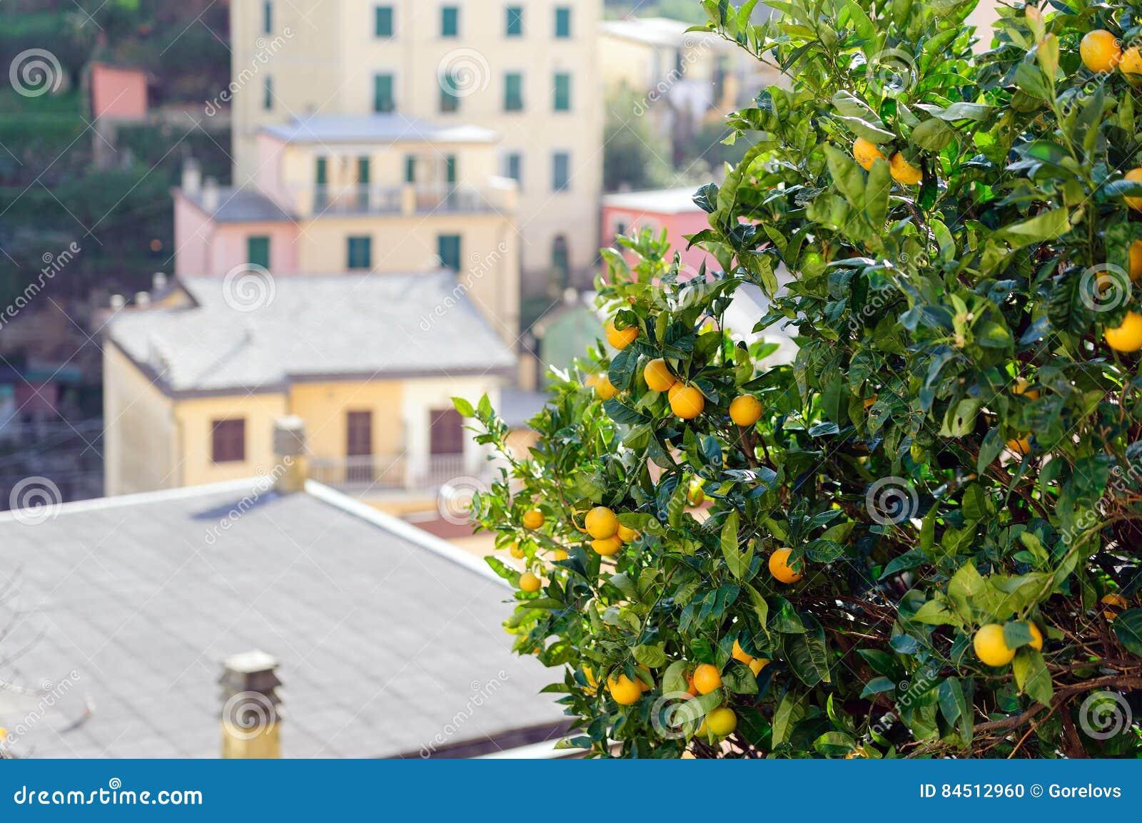 Zieleni drzewa z żółtymi cytrynami