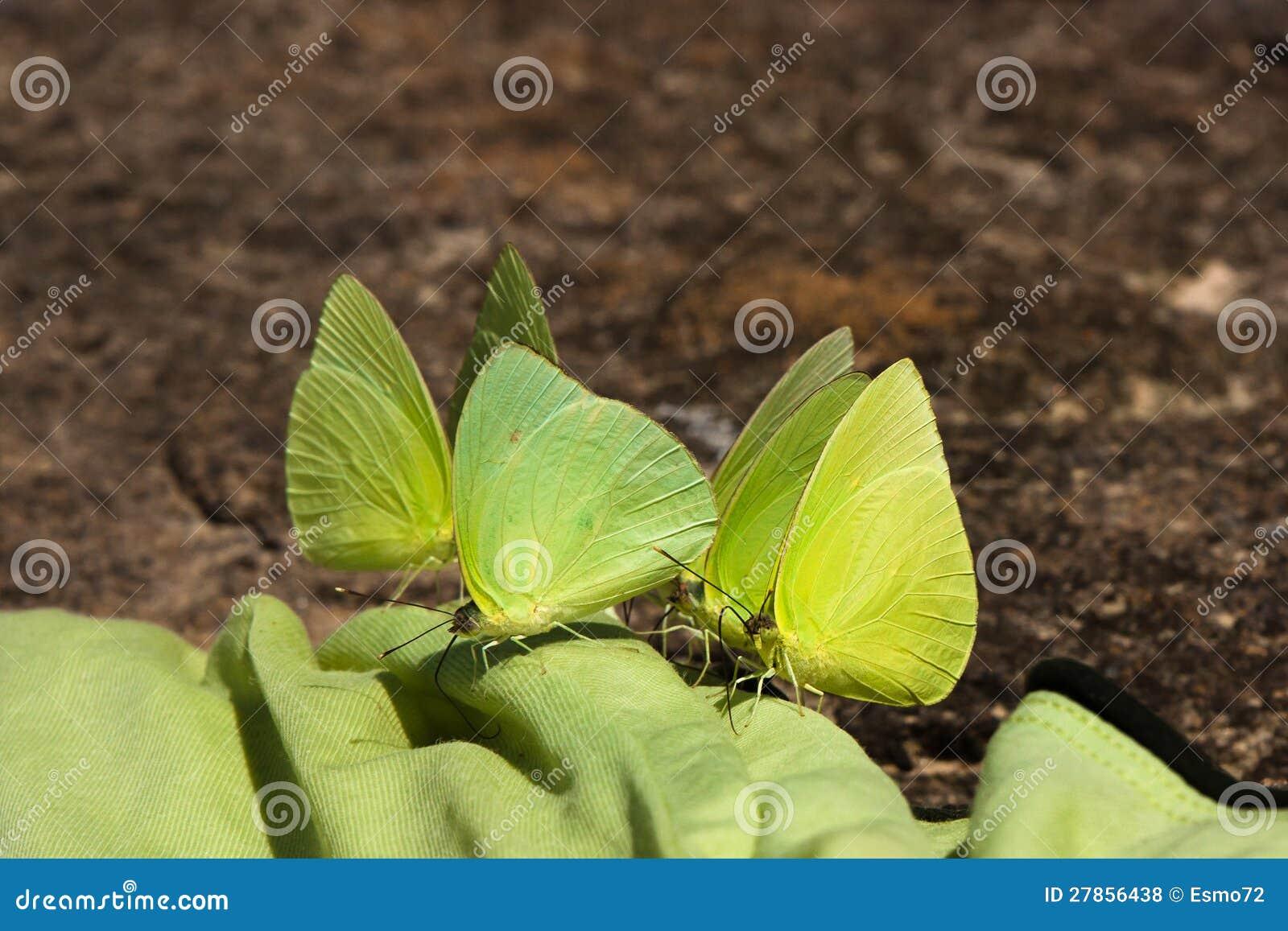 Zieleni Motyle
