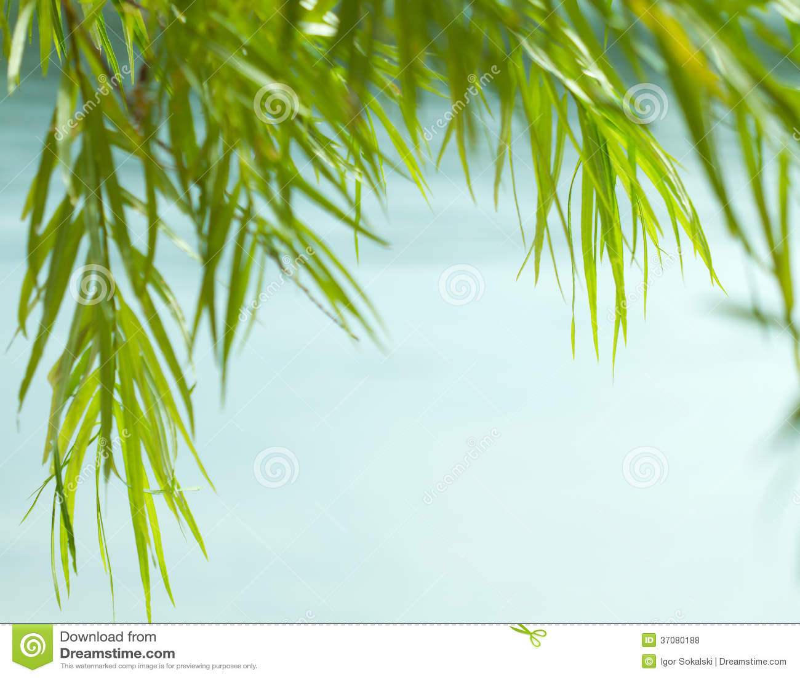 Download Zieleni wierzba liście zdjęcie stock. Obraz złożonej z verdure - 37080188