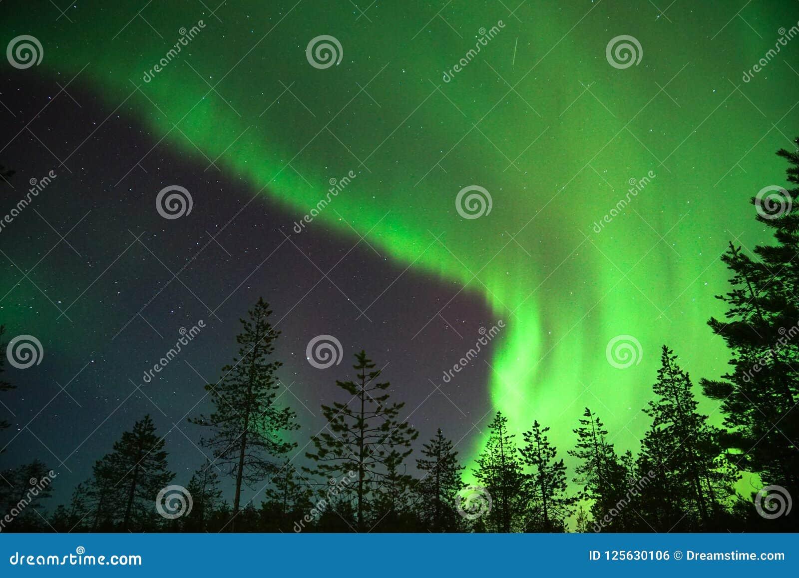 Zieleni zorz borealis w Lapland, Finlandia