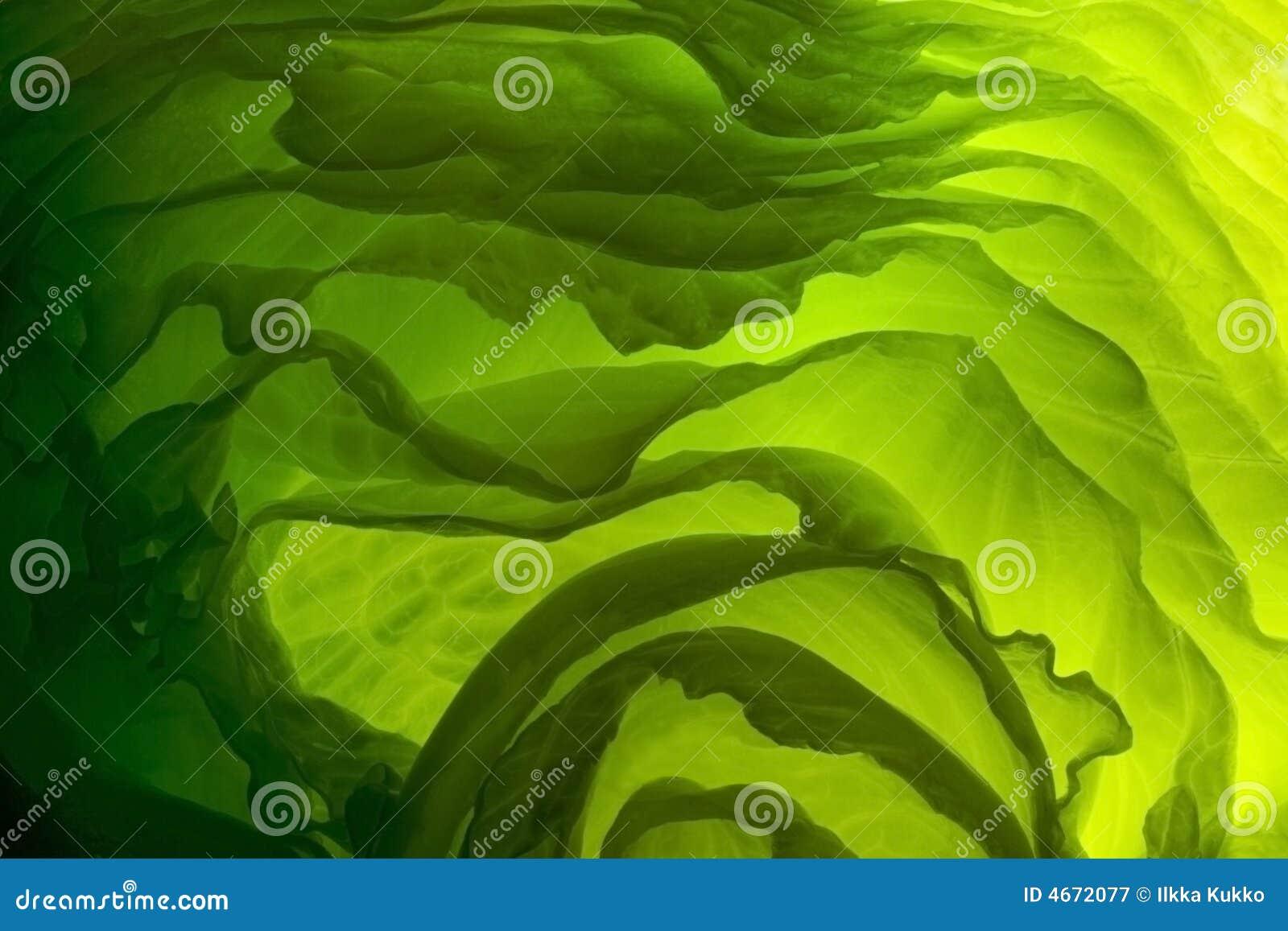 Zieloną sałatkę