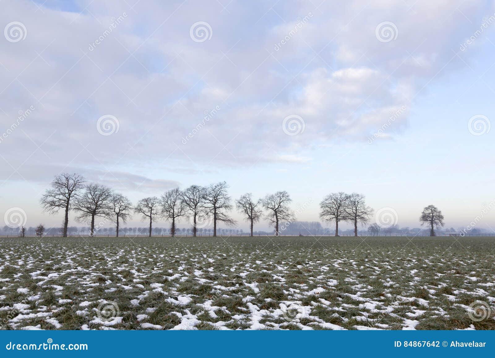 Zielona łąka z łatami śnieżna i drzewna linia blisko Wageningen