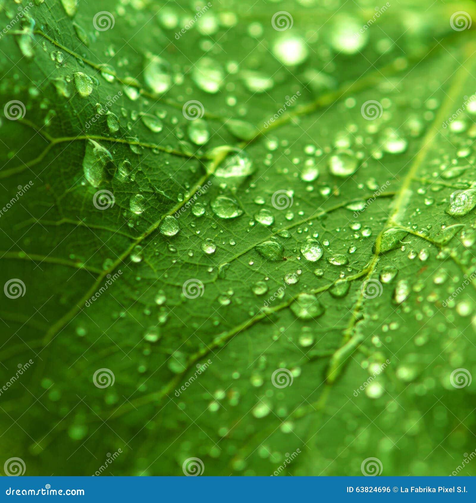 Zielona świeżość