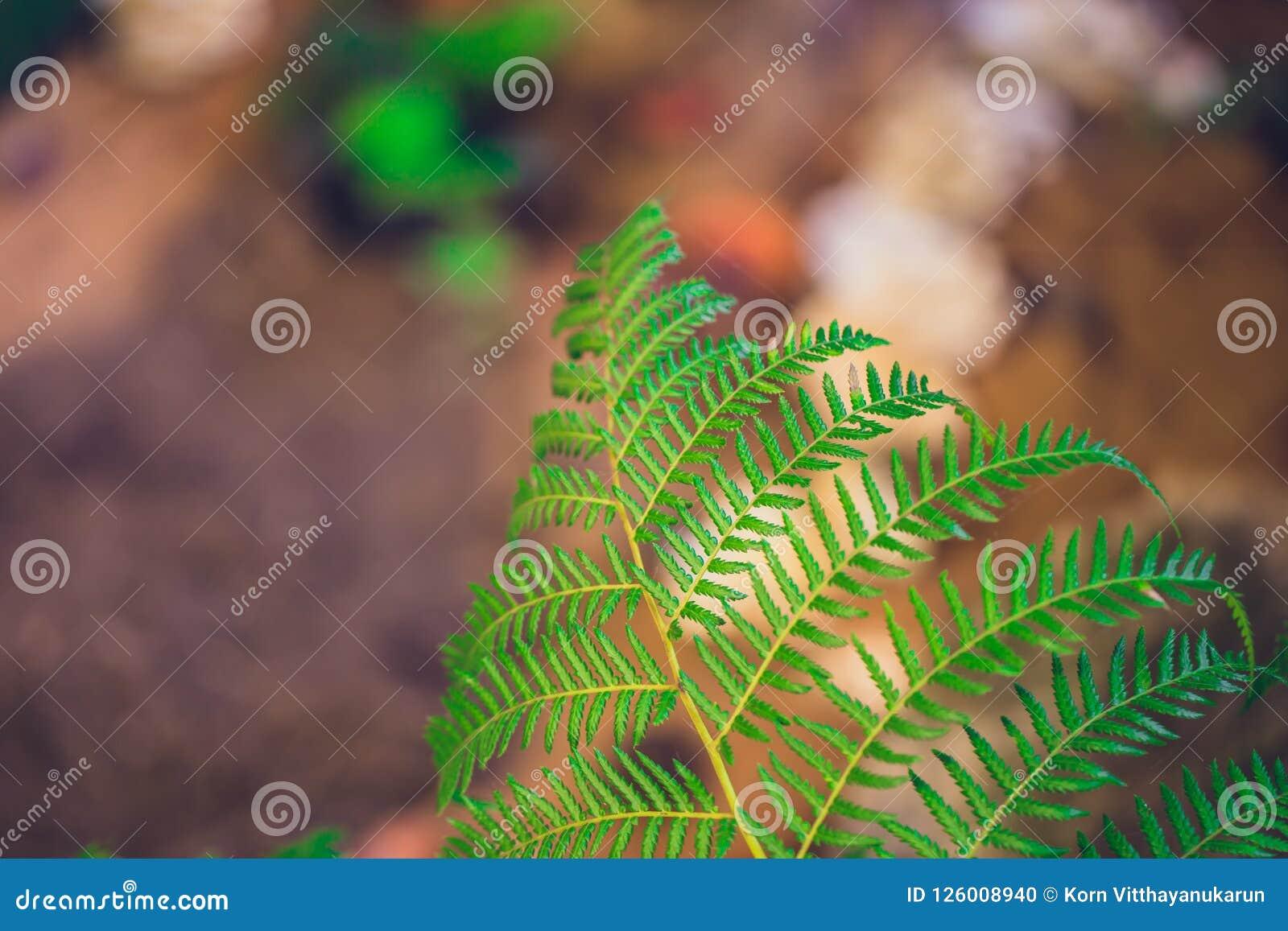 Zielona ekologia, paproć w tropikalnym lesie deszczowym