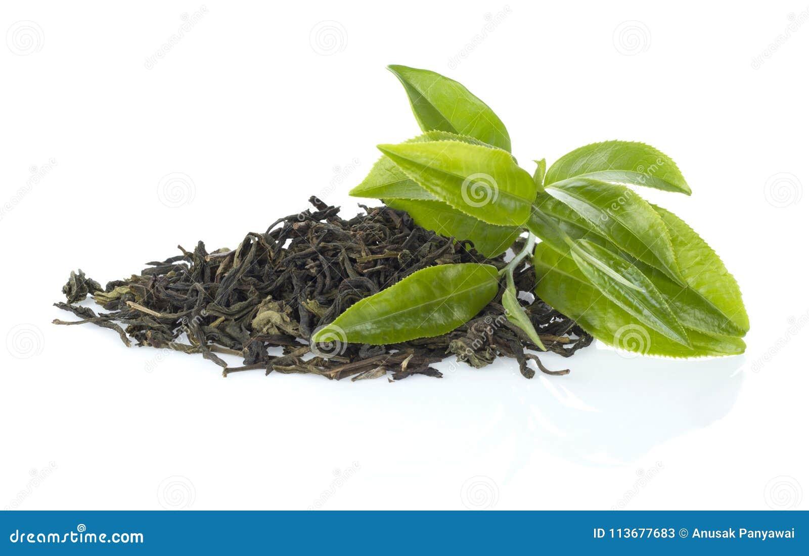 Zielona herbata liści,