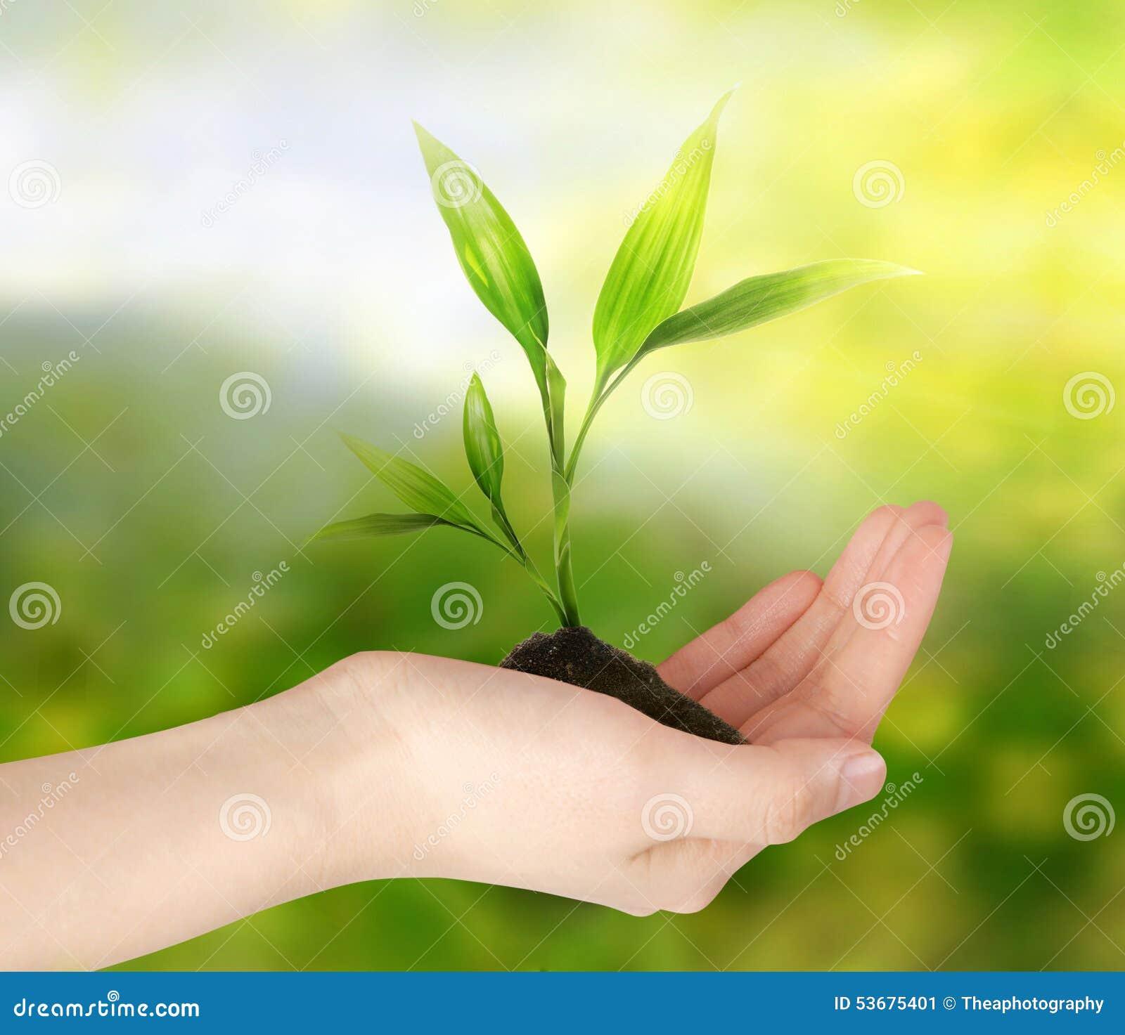 Zielona myśl koncepcja ekologii obrazów więcej mojego portfolio