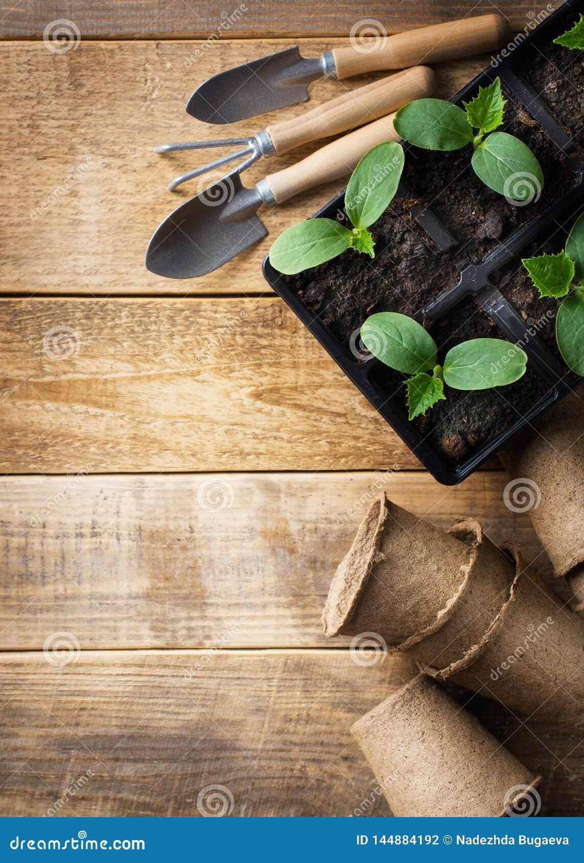 Zielona rozsada w garnkach i narz?dziach na drewnianym tle Ekologia temat
