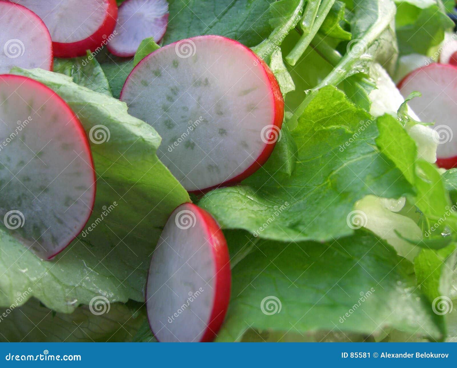 Zielona rzodkwi sałatkę