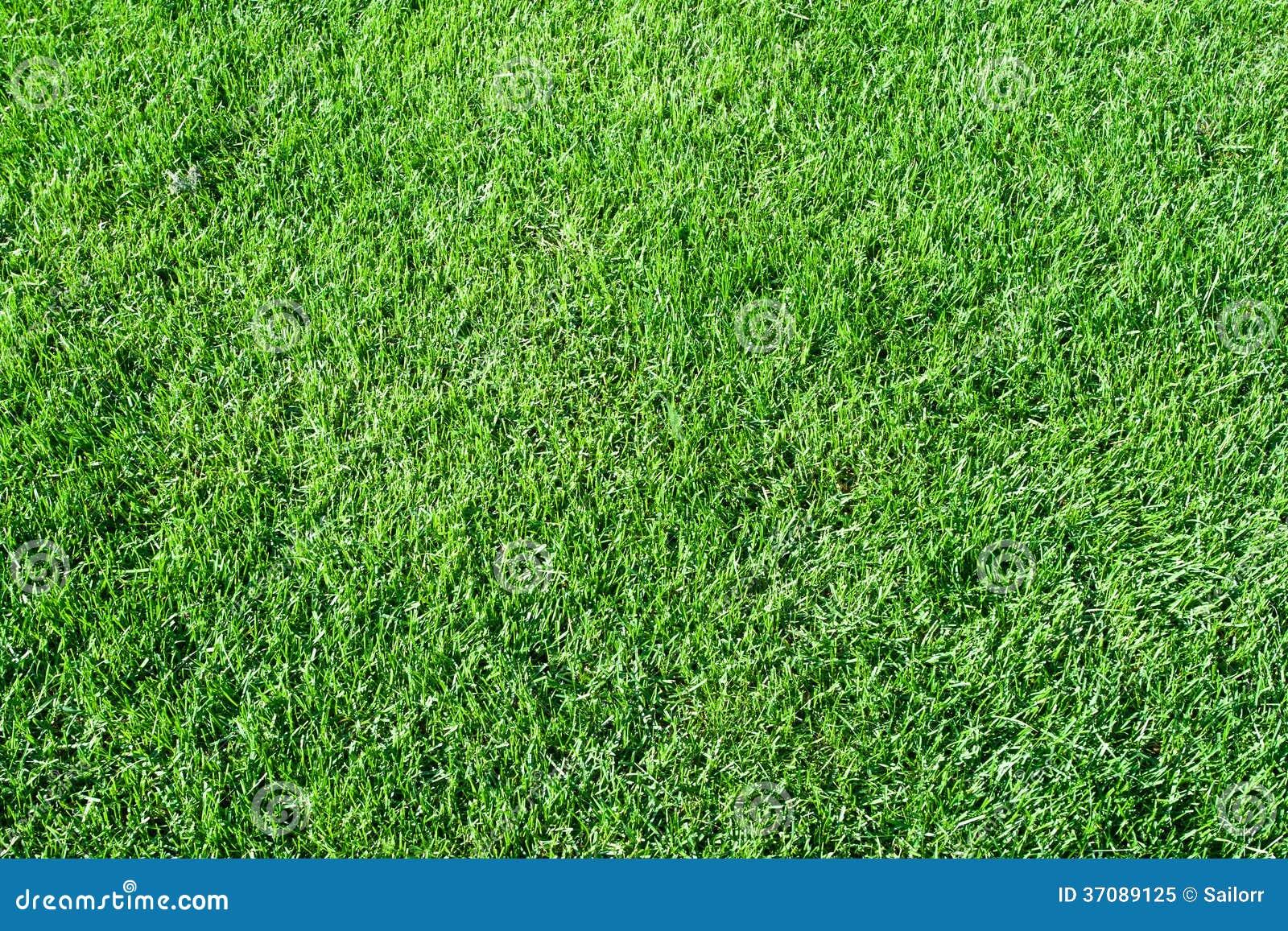 Download Zielona trawa obraz stock. Obraz złożonej z kolor, greenbacks - 37089125