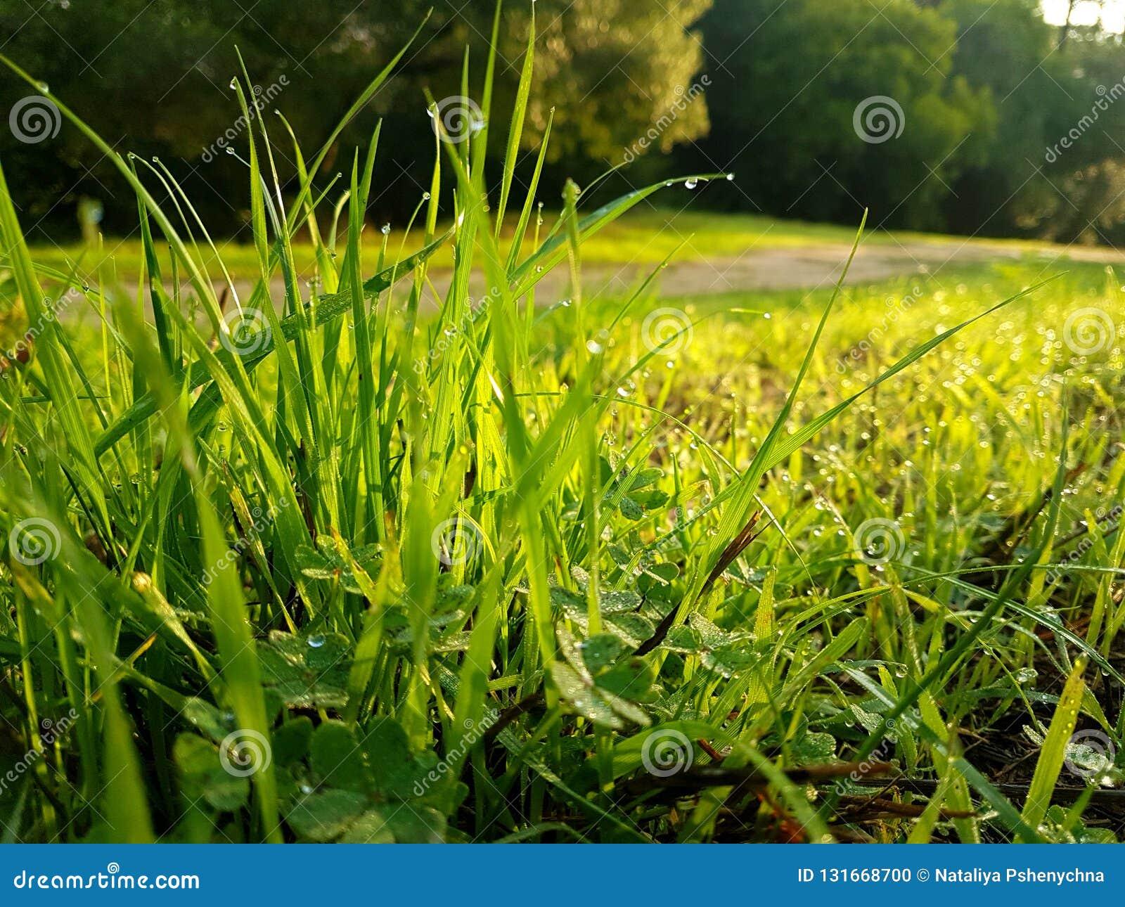 Zielona trawa z wodnymi kroplami